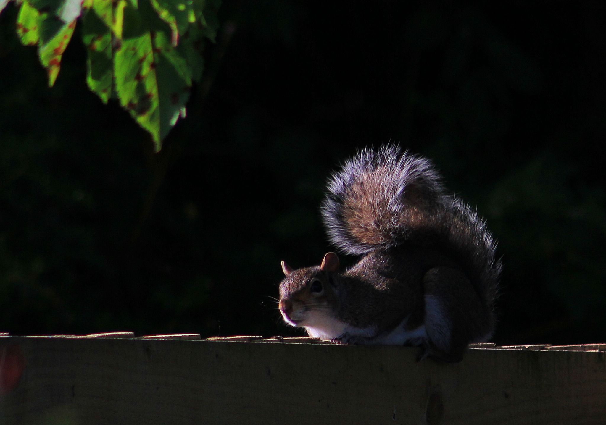 Morning squirrel by Turnip Towers