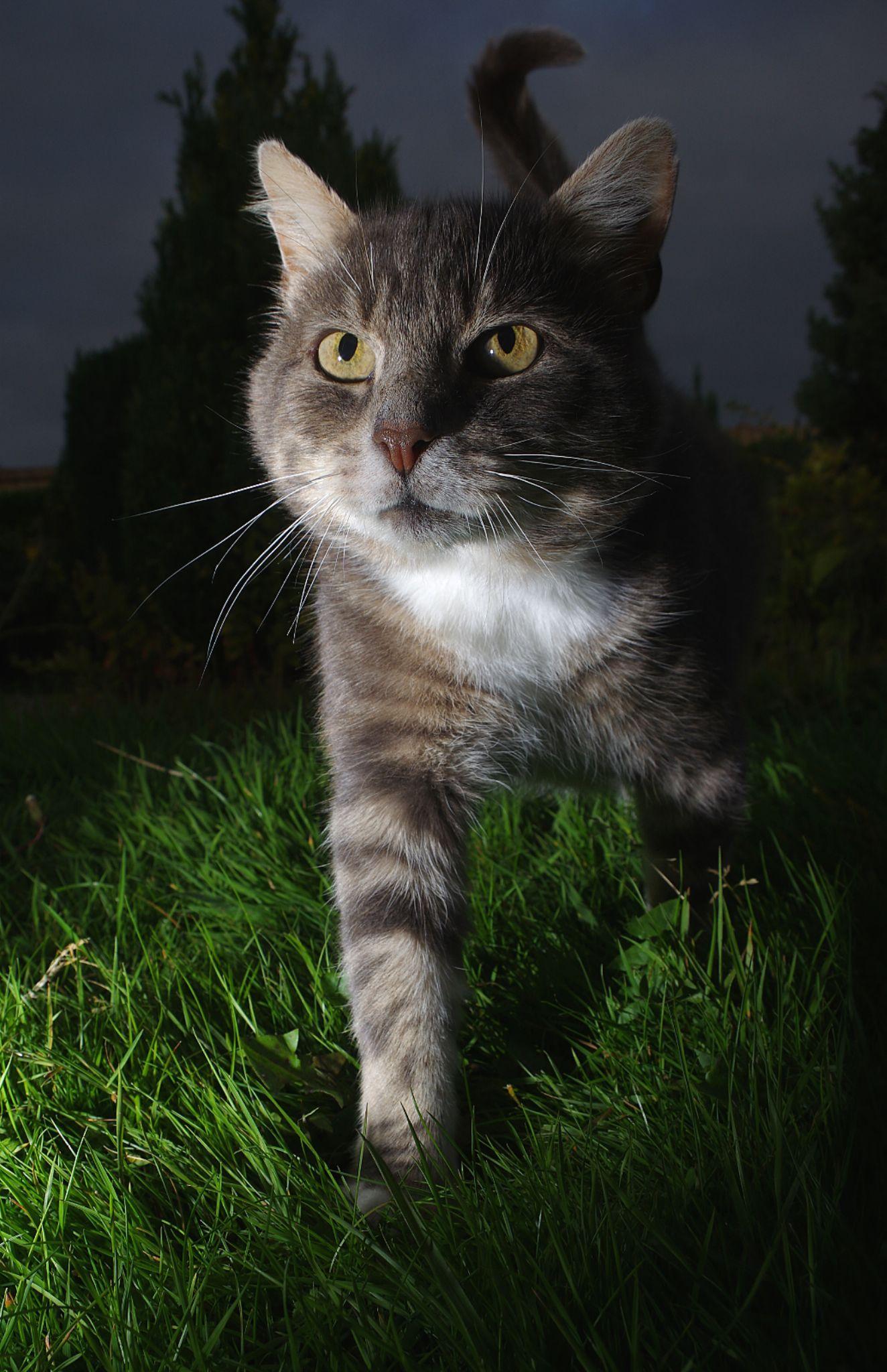 Night hunter by Turnip Towers