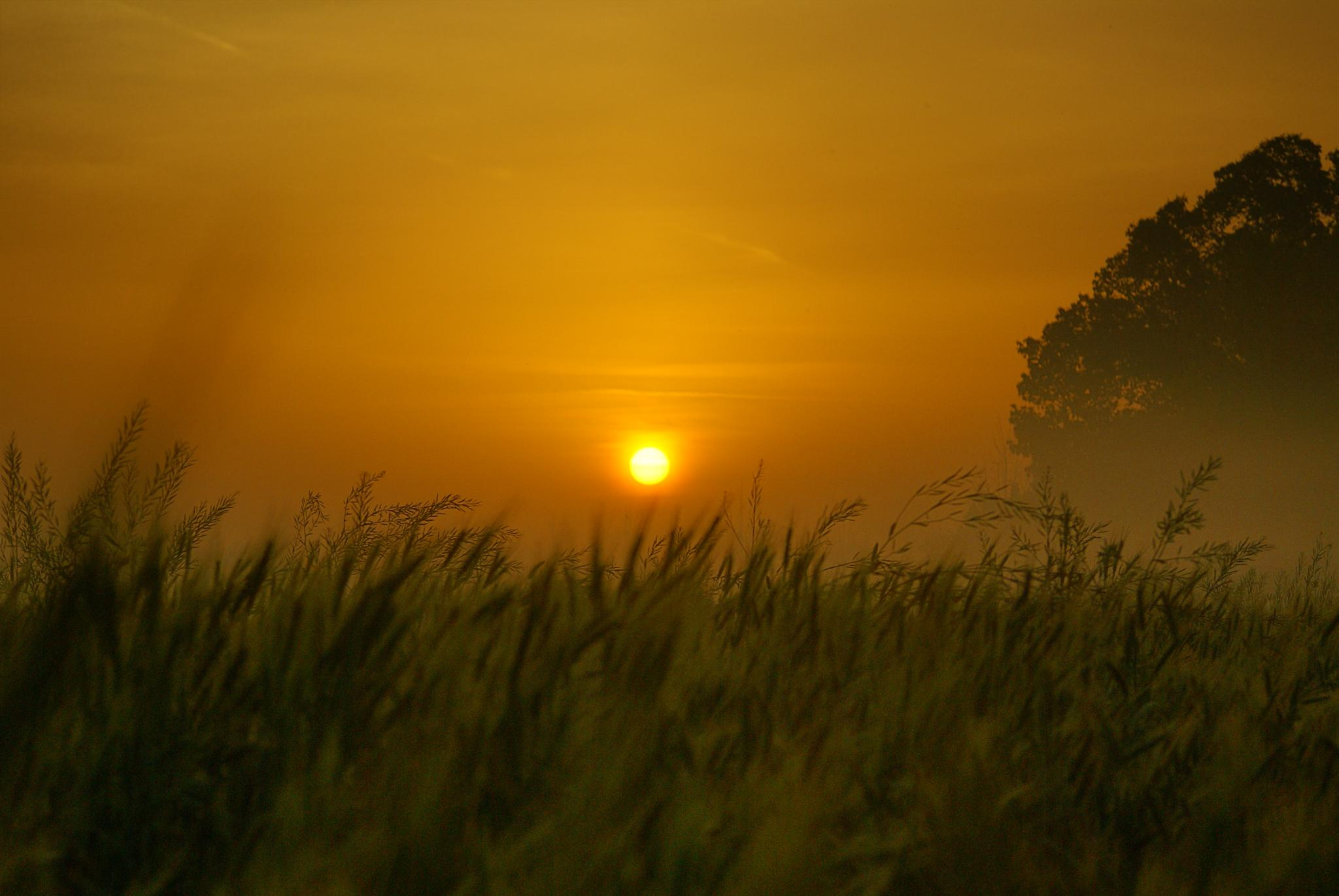 Morning in Field by Mohsan Haidry