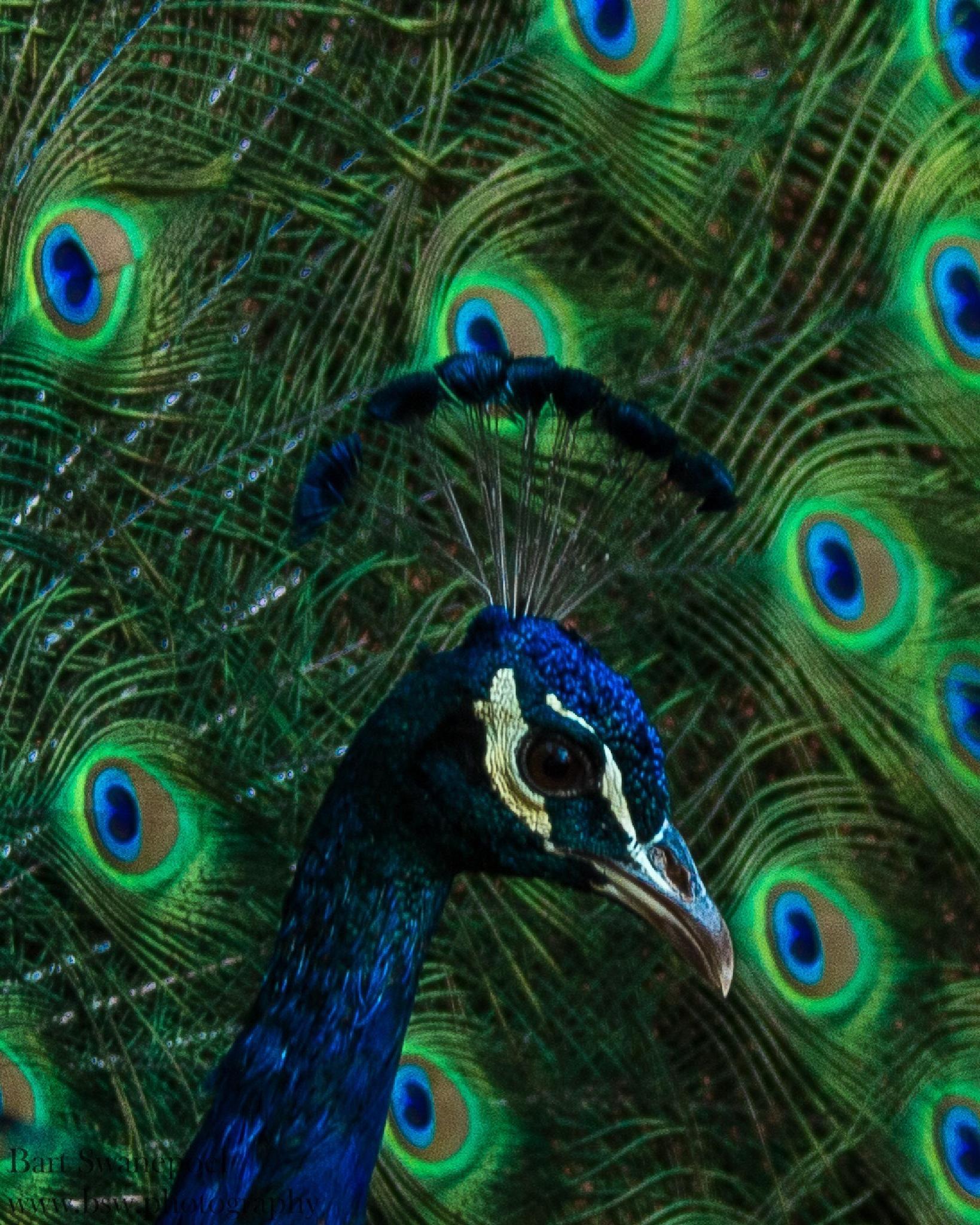 Big blue by Bart Swanepoel