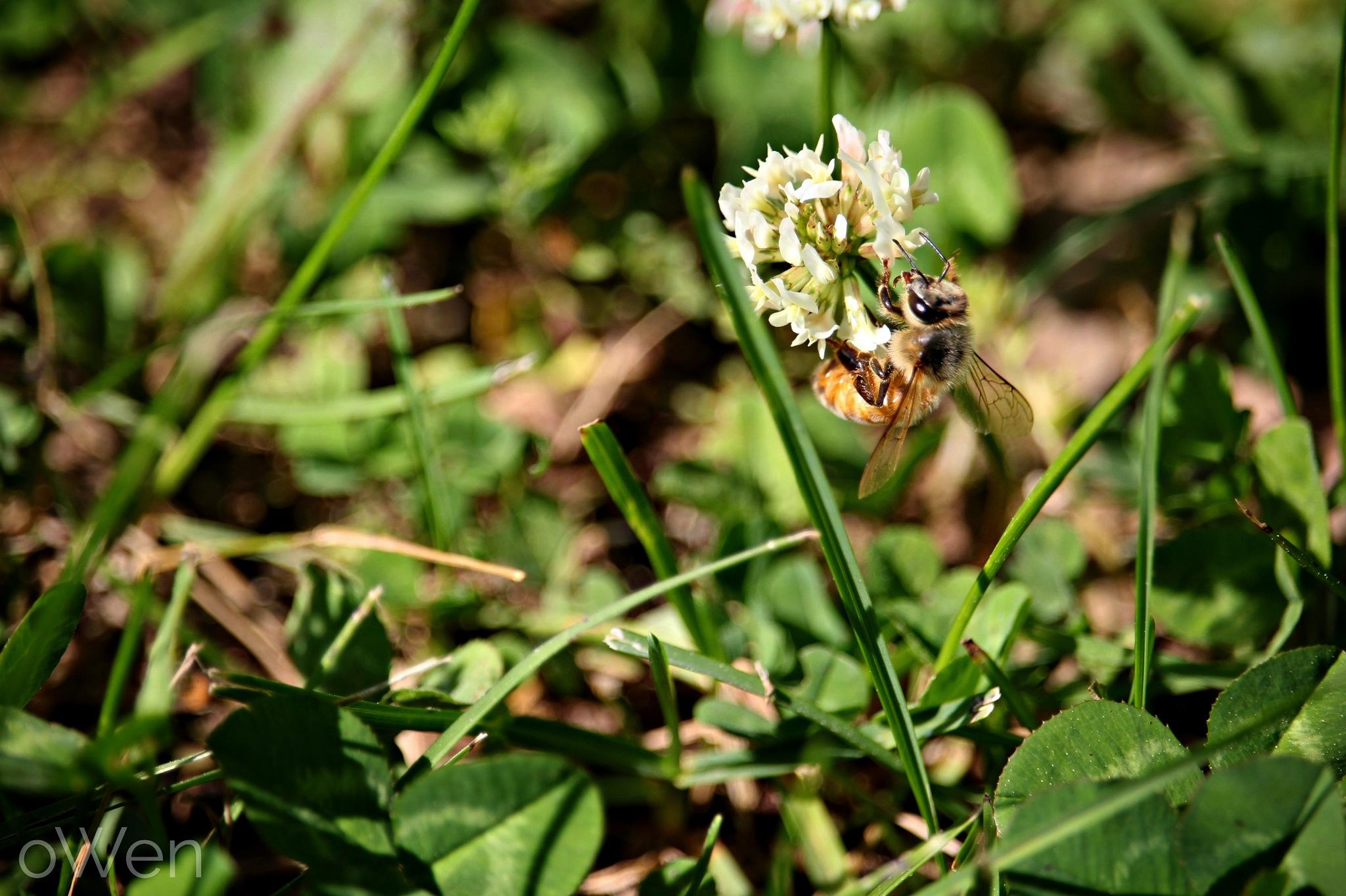 The Pollinator by Blane Owen