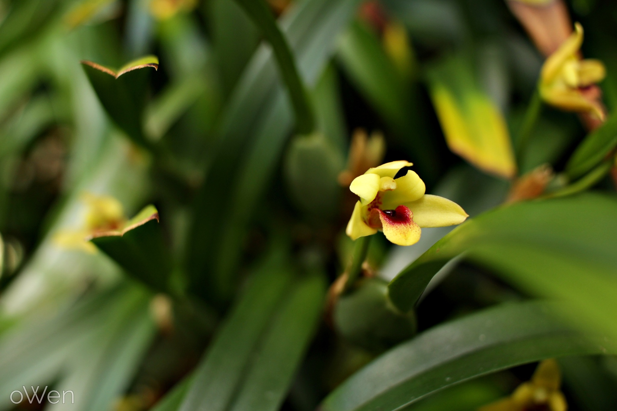 Small Yellow Flowers by Blane Owen