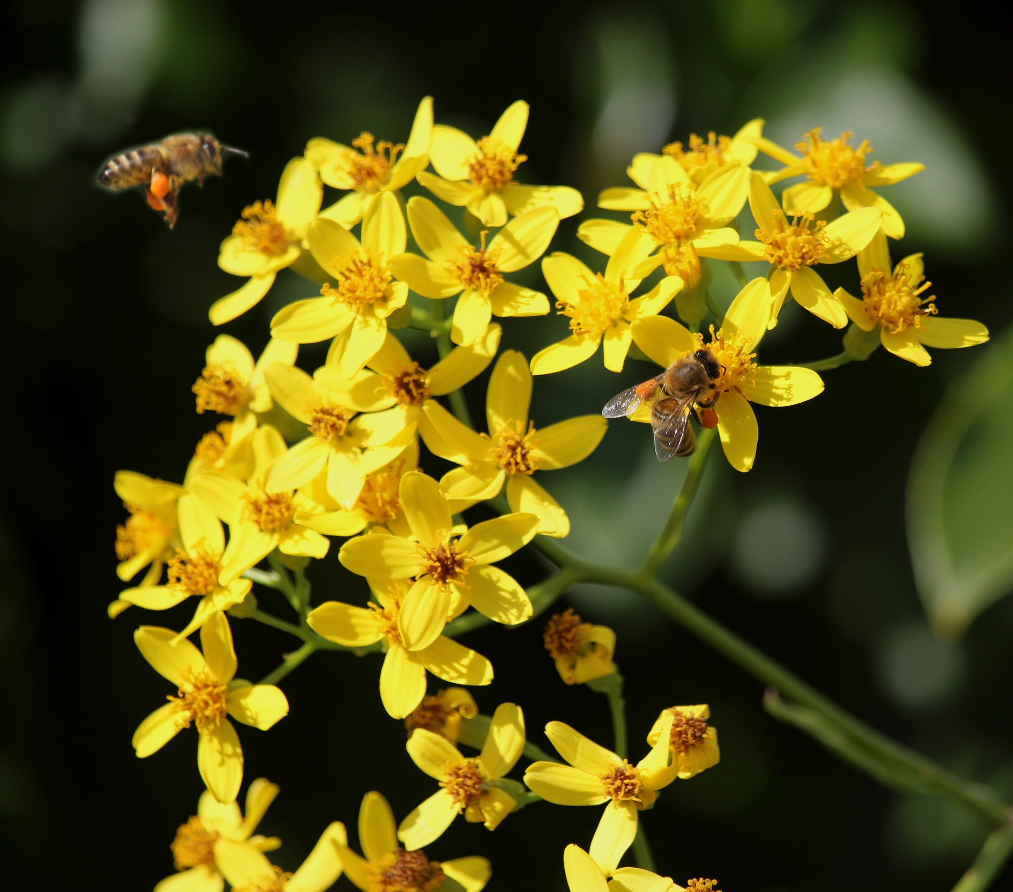 Bees in the flowers by JenC