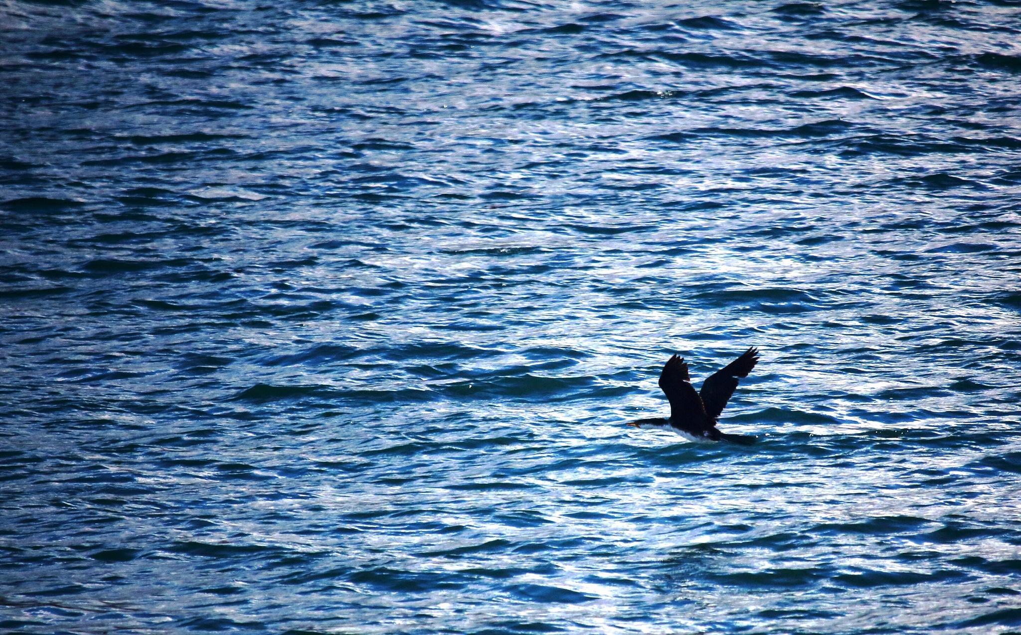Bird over ocean by JenC