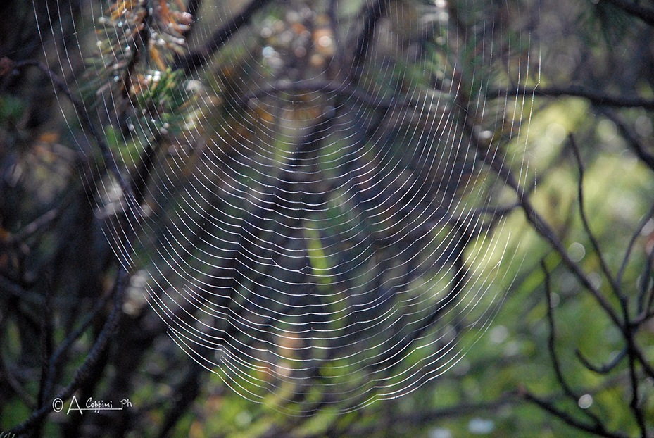 WEB... by Alessandro Coppini