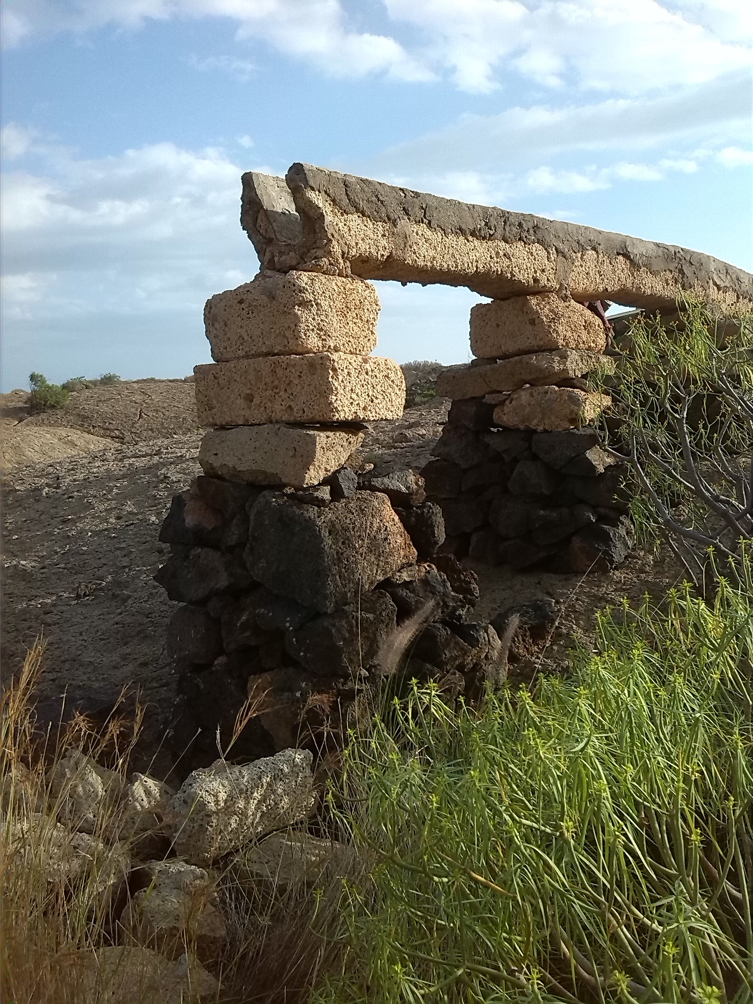 TAJEA..OLD AGRICULTURE IN THE SOUTH OF TENERIFE by naturatradicionalcanarias