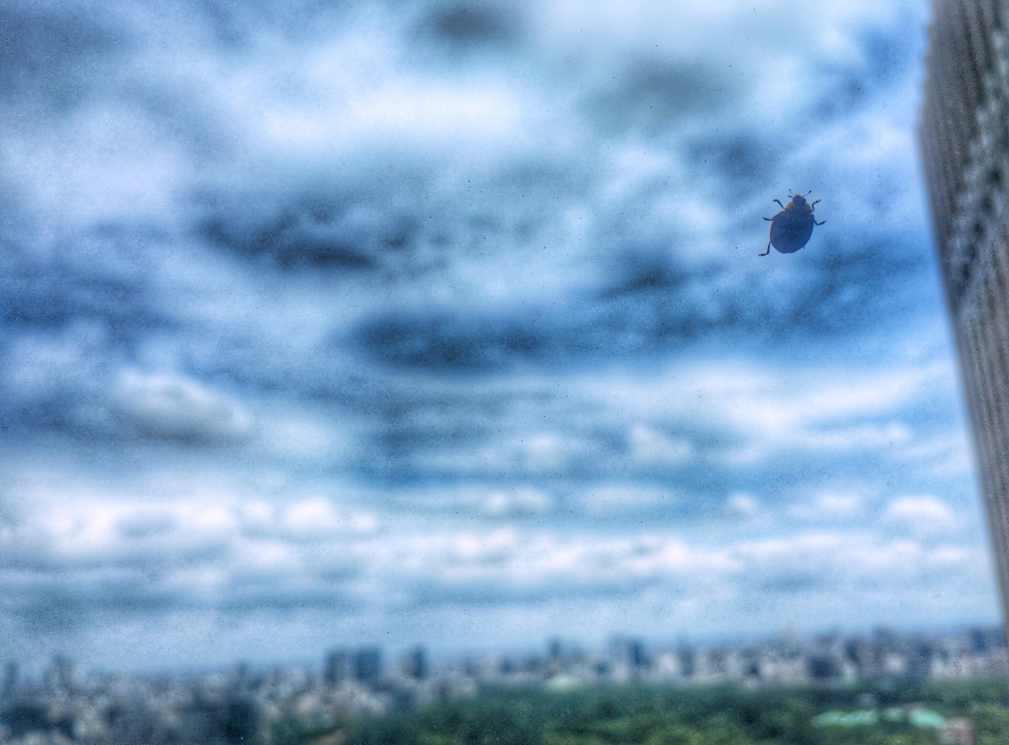 Ladybug in the sky  by Mimi Kozuki