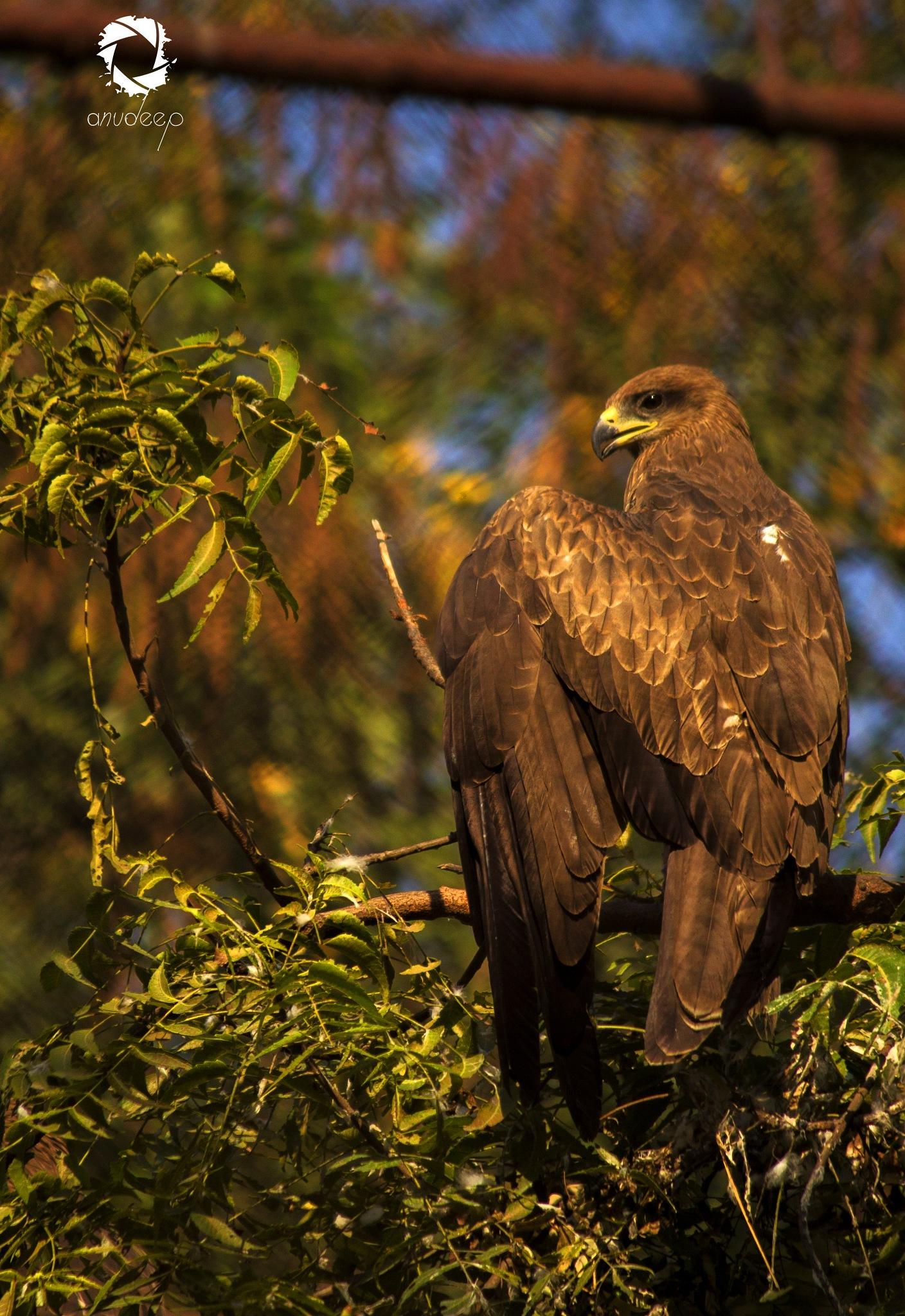 Guarding the habitat!  by Anudeep