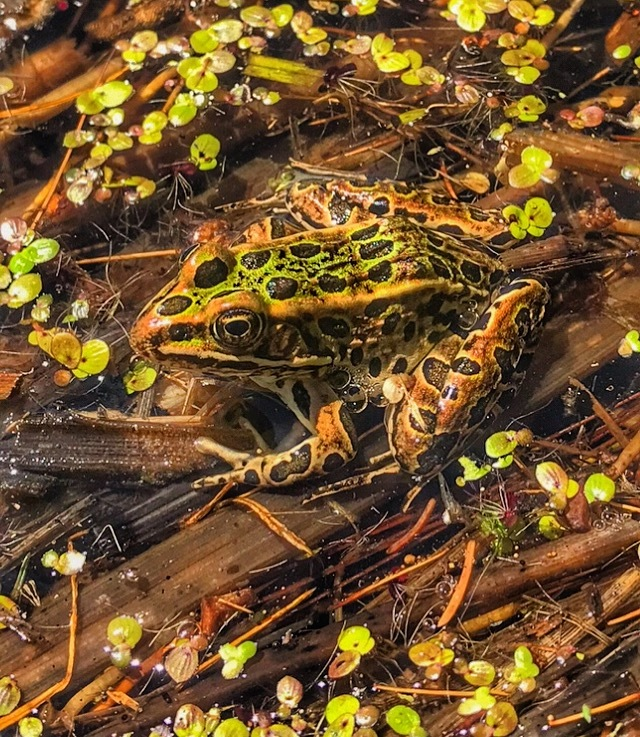 Camouflaged like a boss by Darrick Sommers