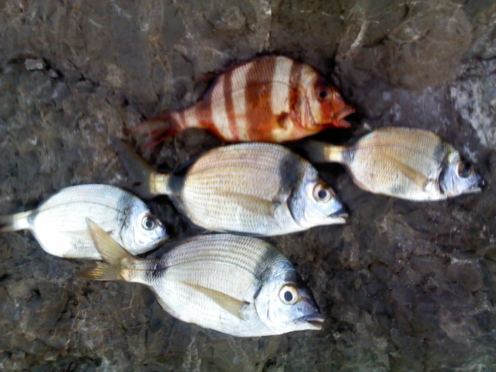 fish (menu) by Mohamed Zaïdi