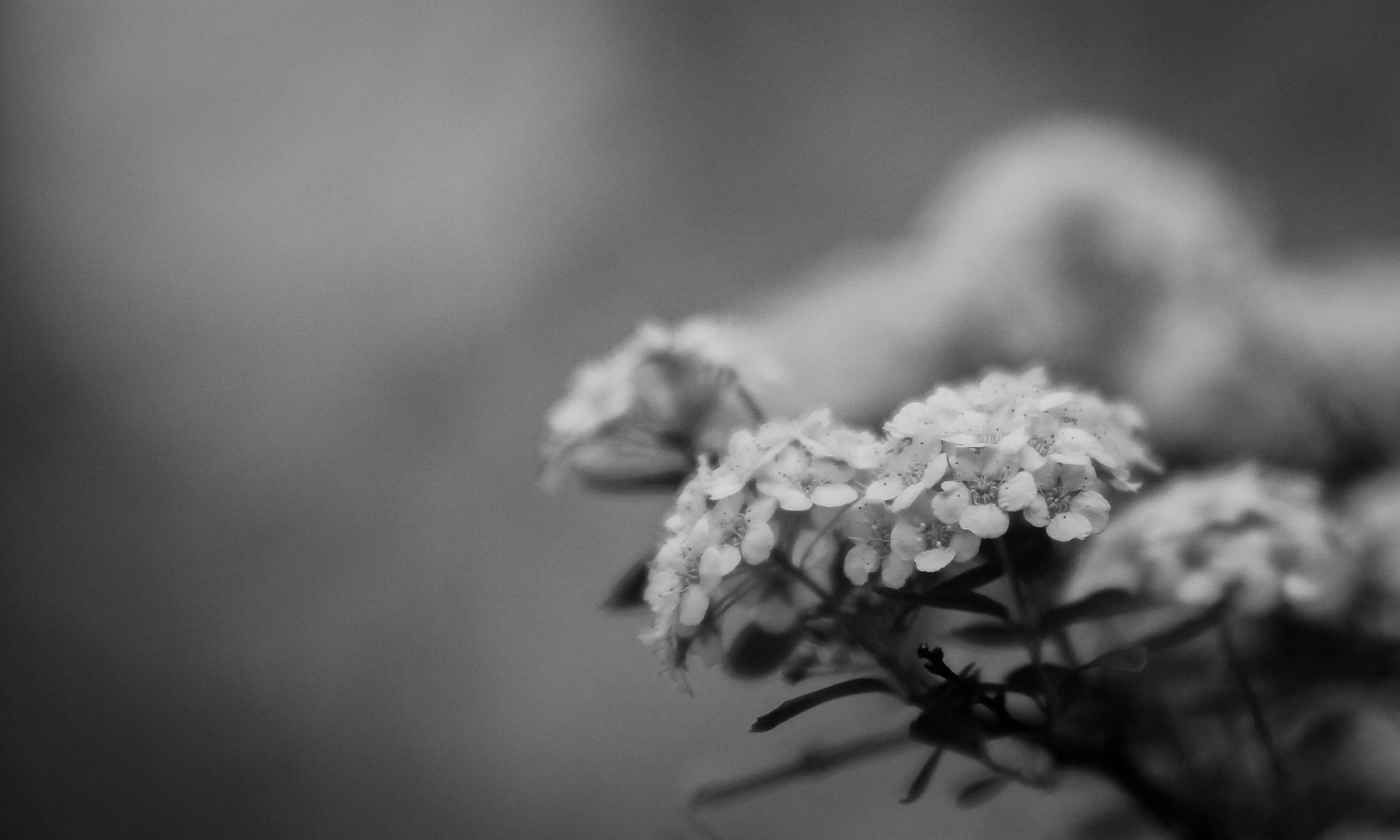 Little bones by Matthew Barton