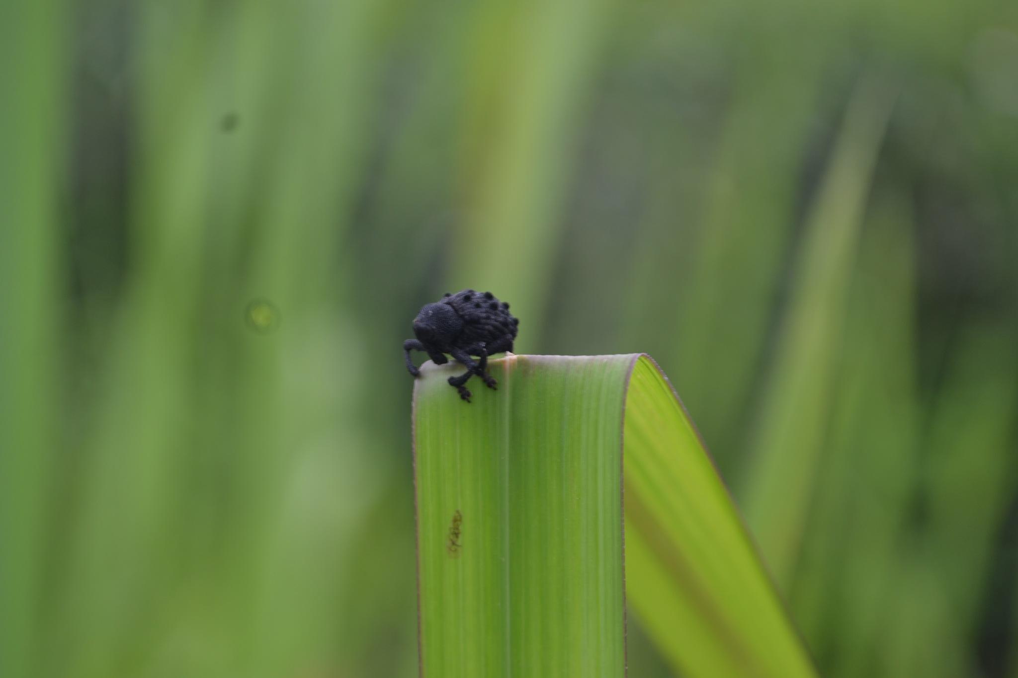 Black bug want to go by Kanittha Sritipeng