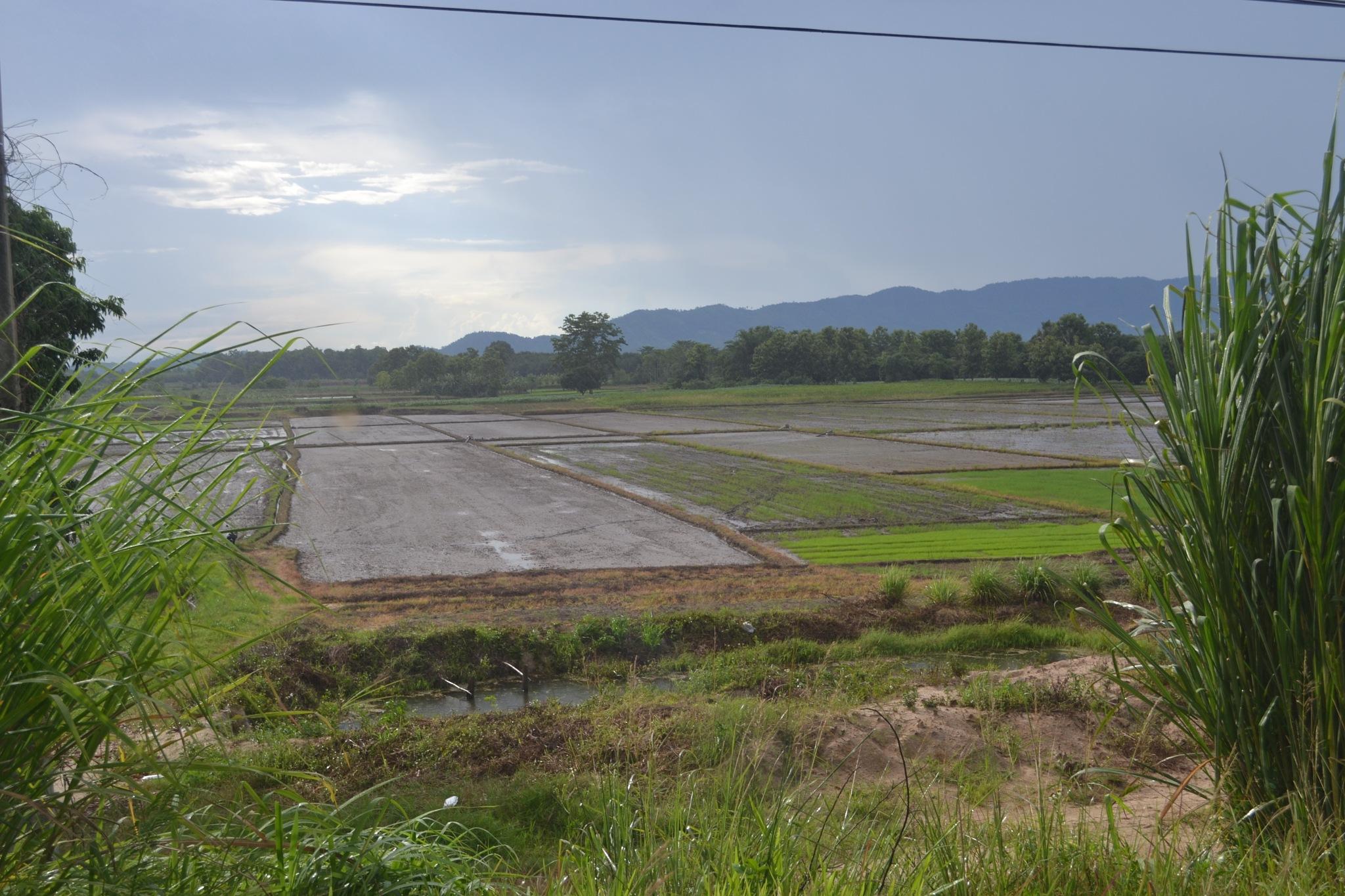 field@Chiang rai,Thailand by Kanittha Sritipeng