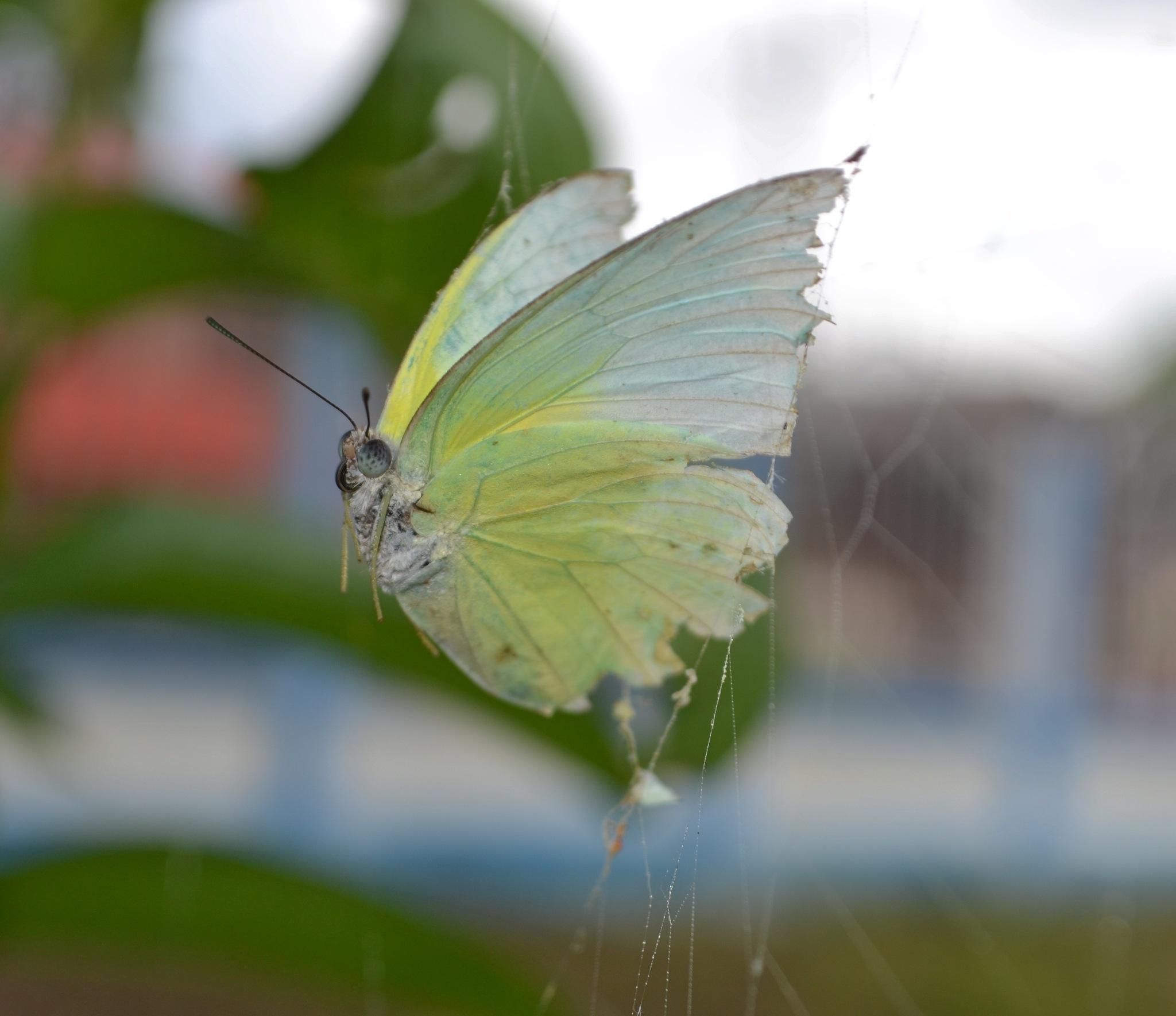 catch !!!  by Kanittha Sritipeng