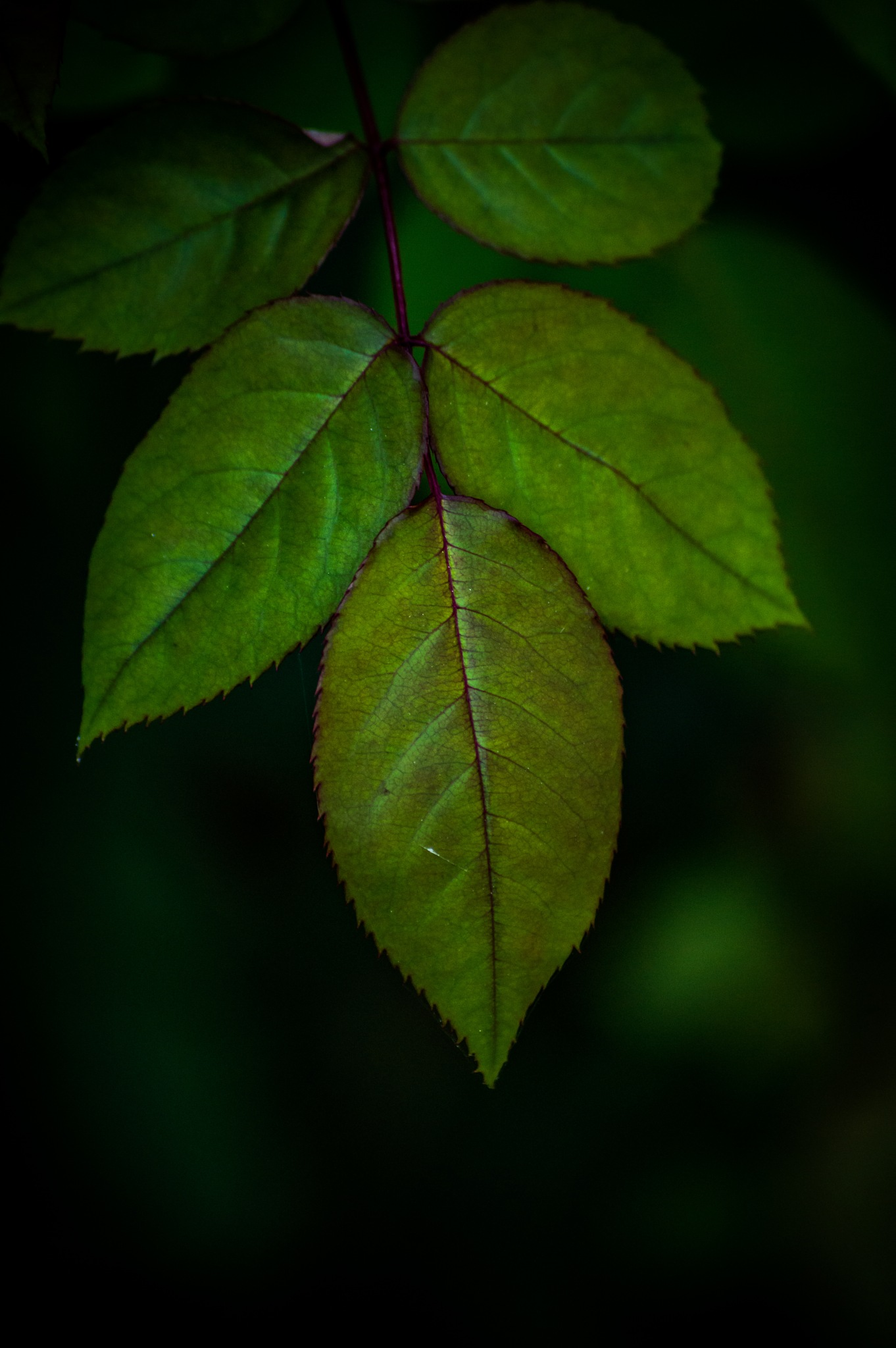 Green leafs by Iulian Bud