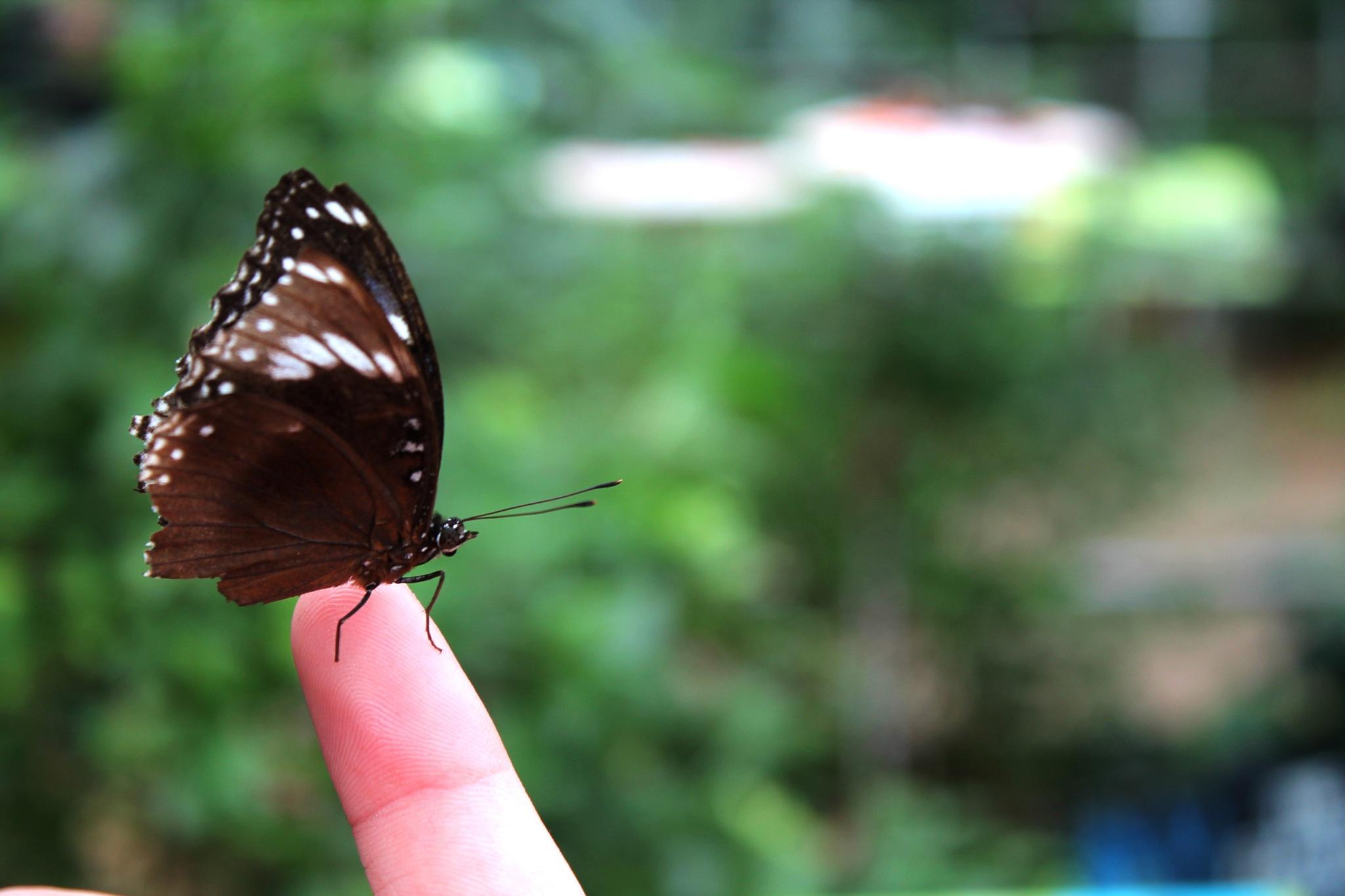 Butterfly by Maddi Jane
