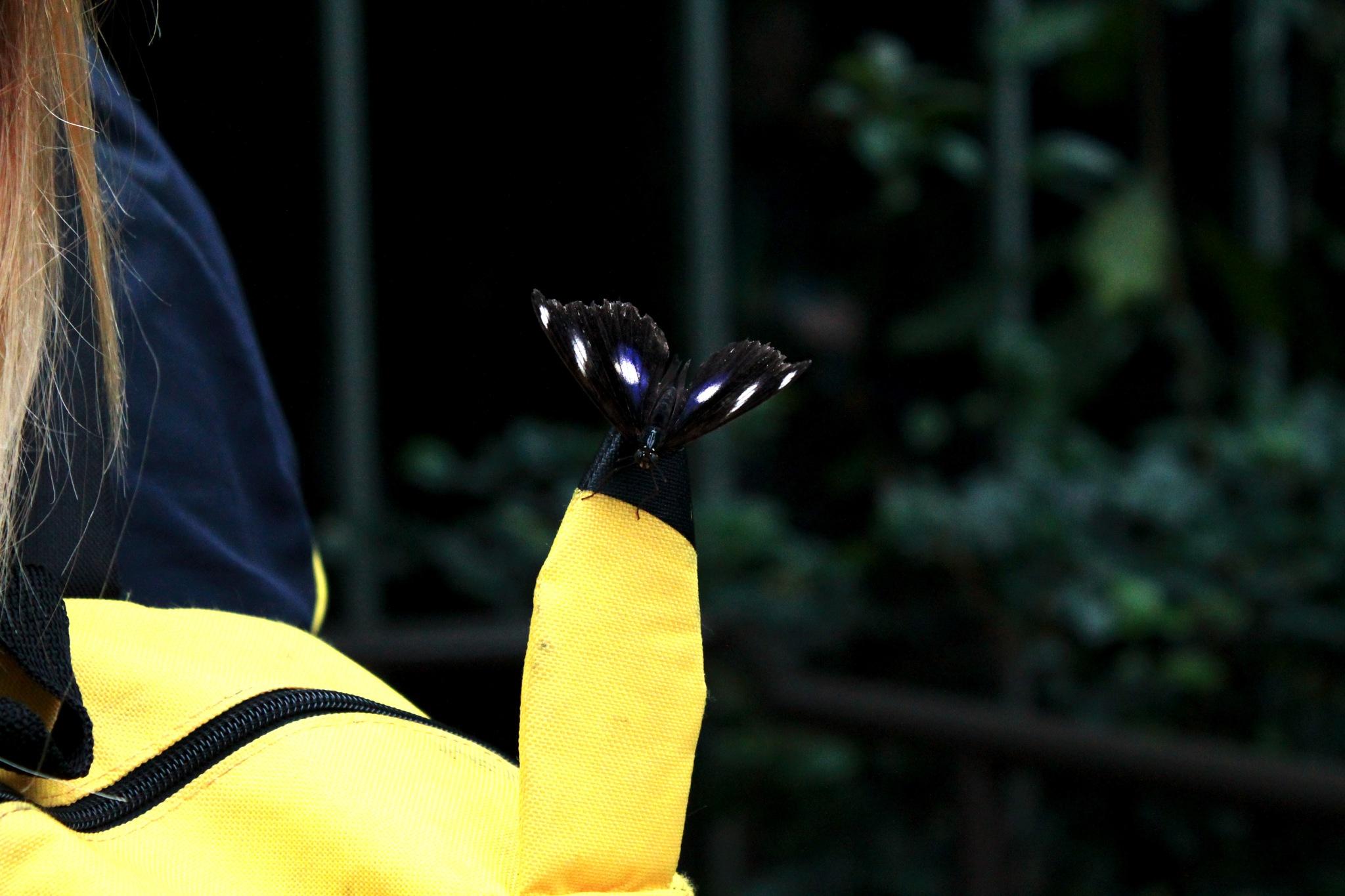 Butterfly 2 by Maddi Jane