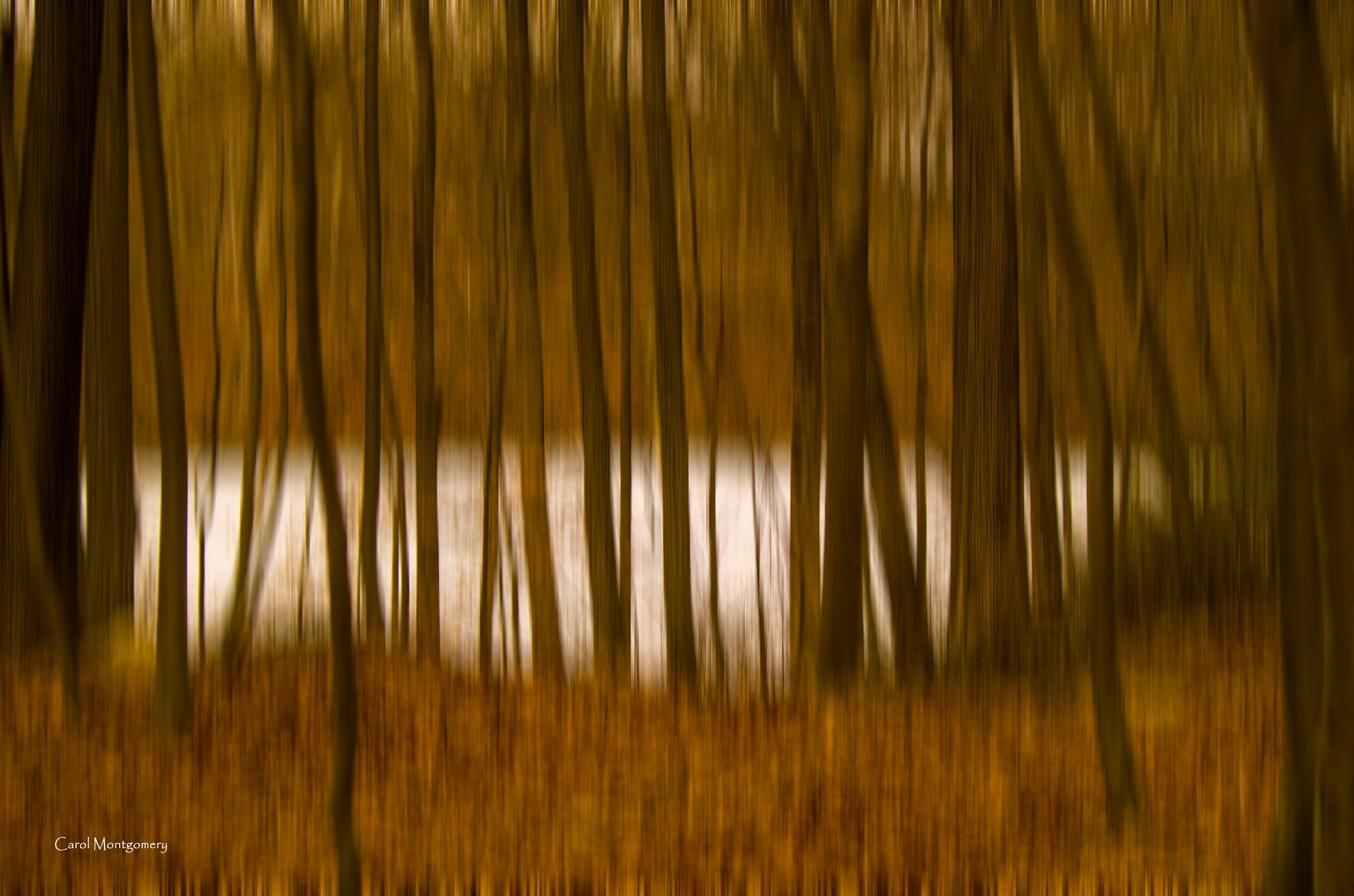 In the woods by Carol Montgomery