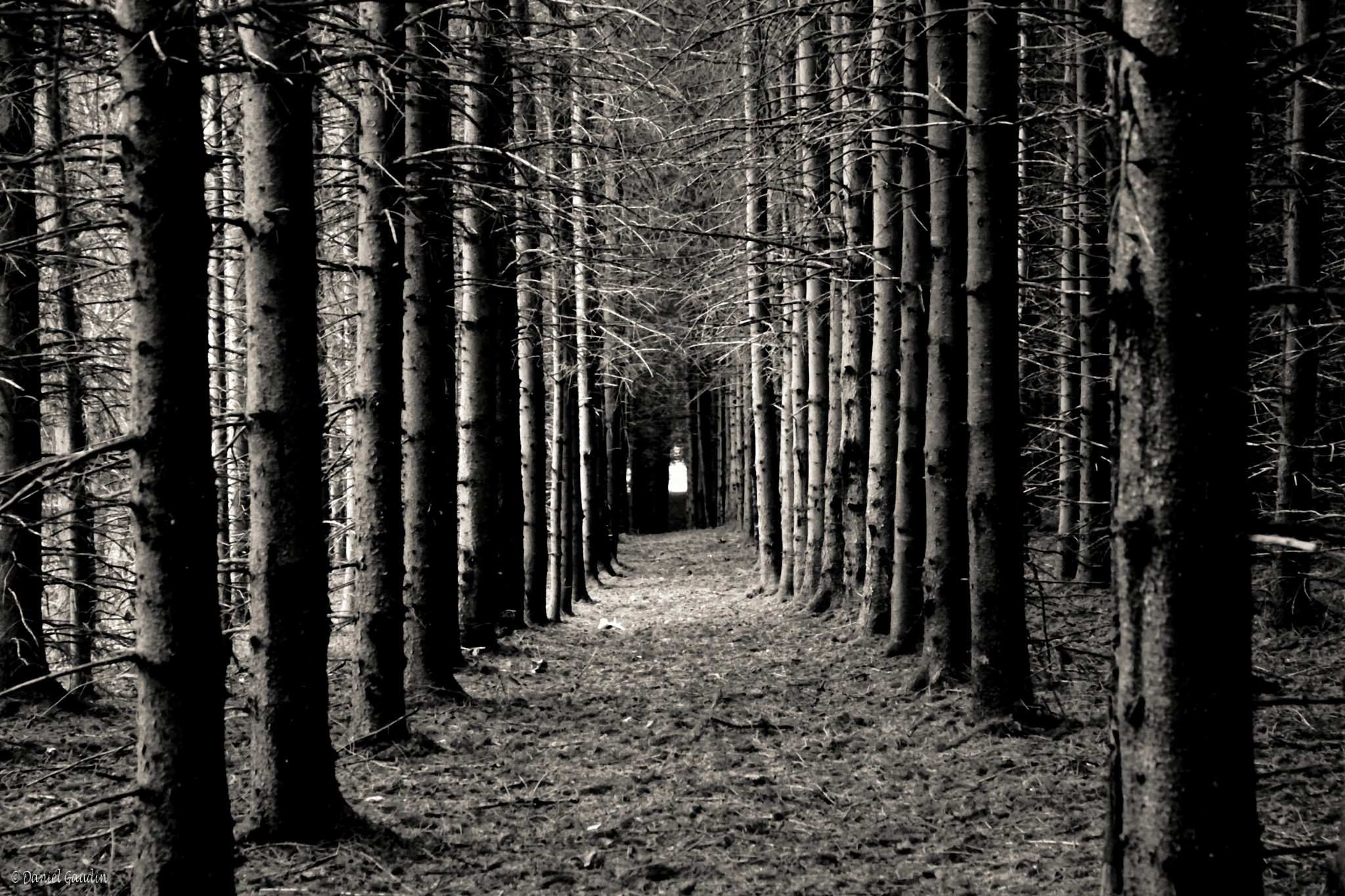 Untitled by Daniel Gaudin Photographe