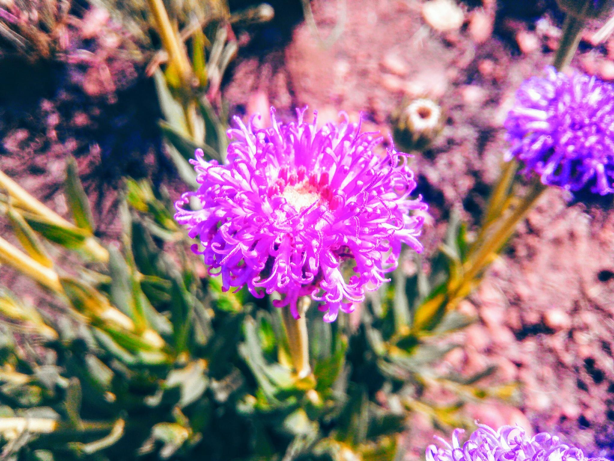 Blossom  by juniorBukaso