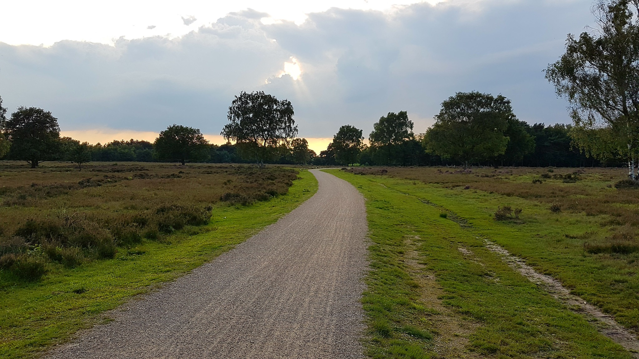 The beauty of a simple road in nature - The Netherlands  by Orhan Polat Projectmanagement