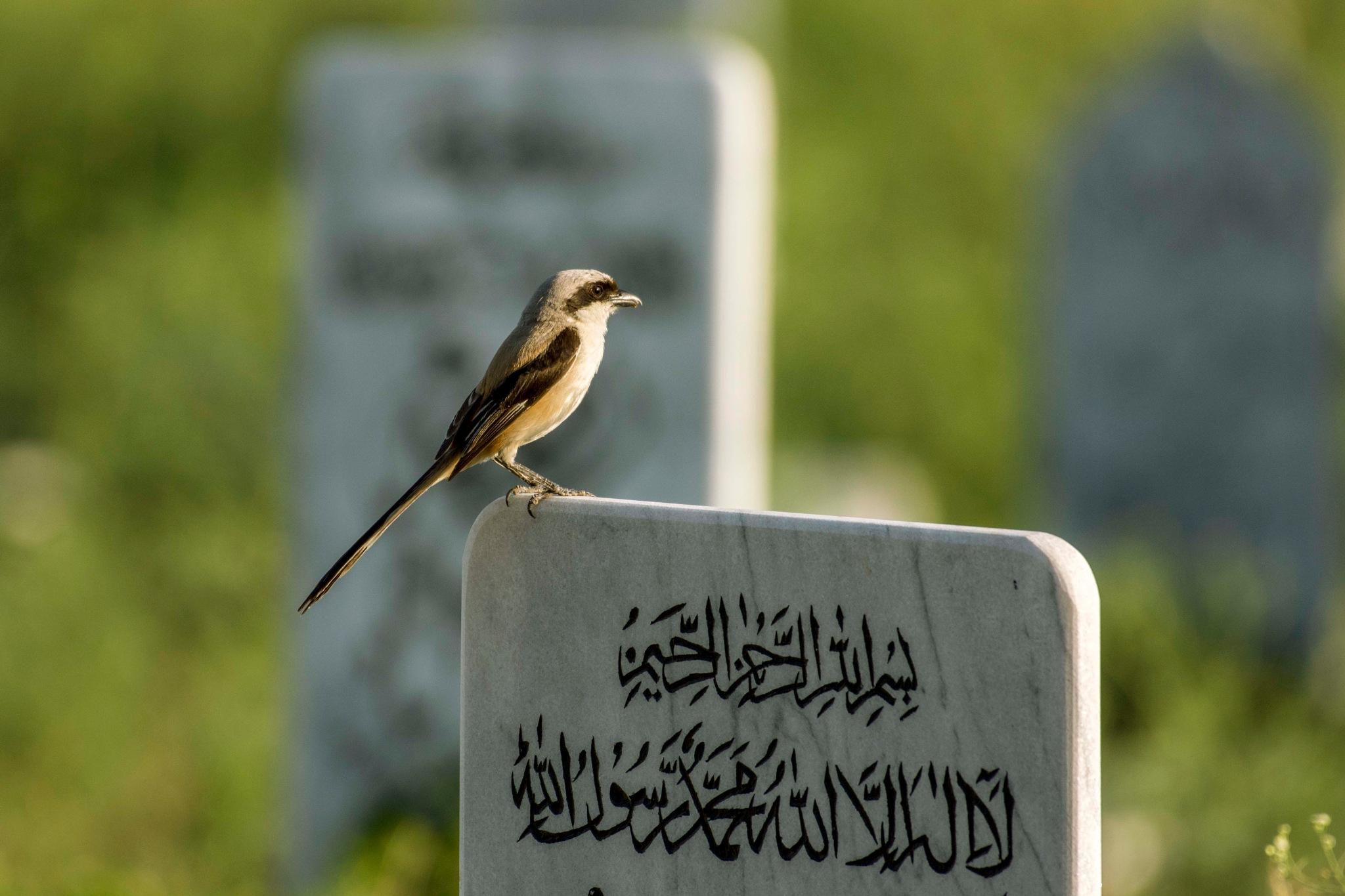 Bird in grave yard by Muhammad Azhar Hafeez