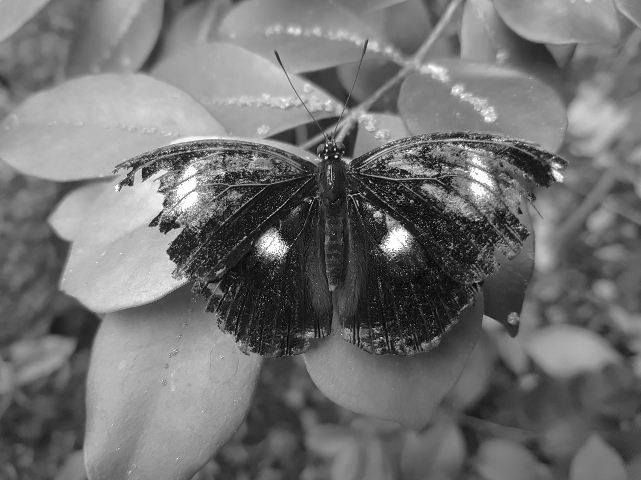 Broken wings by William Kemp