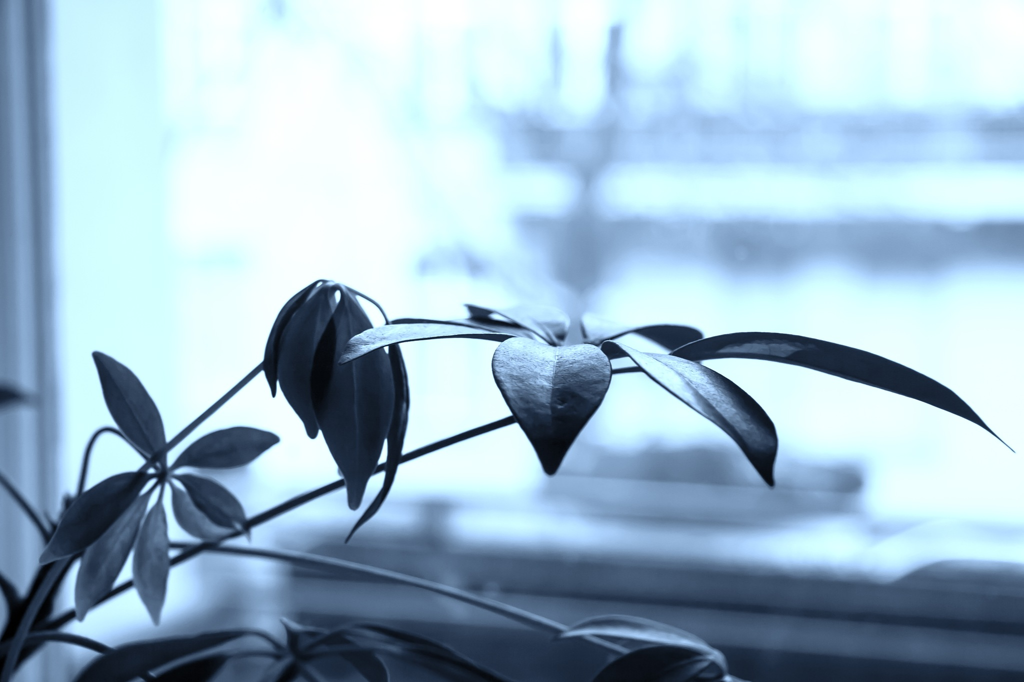 Blue Branch by Iri Kirova