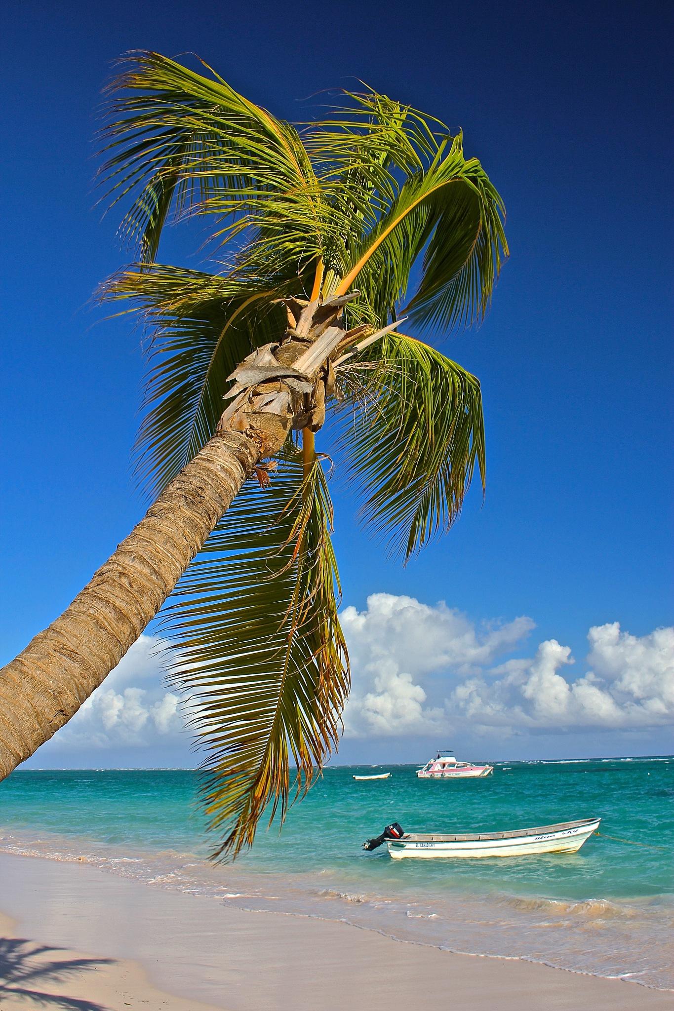 Le palmier & Le  bateau by lolo35