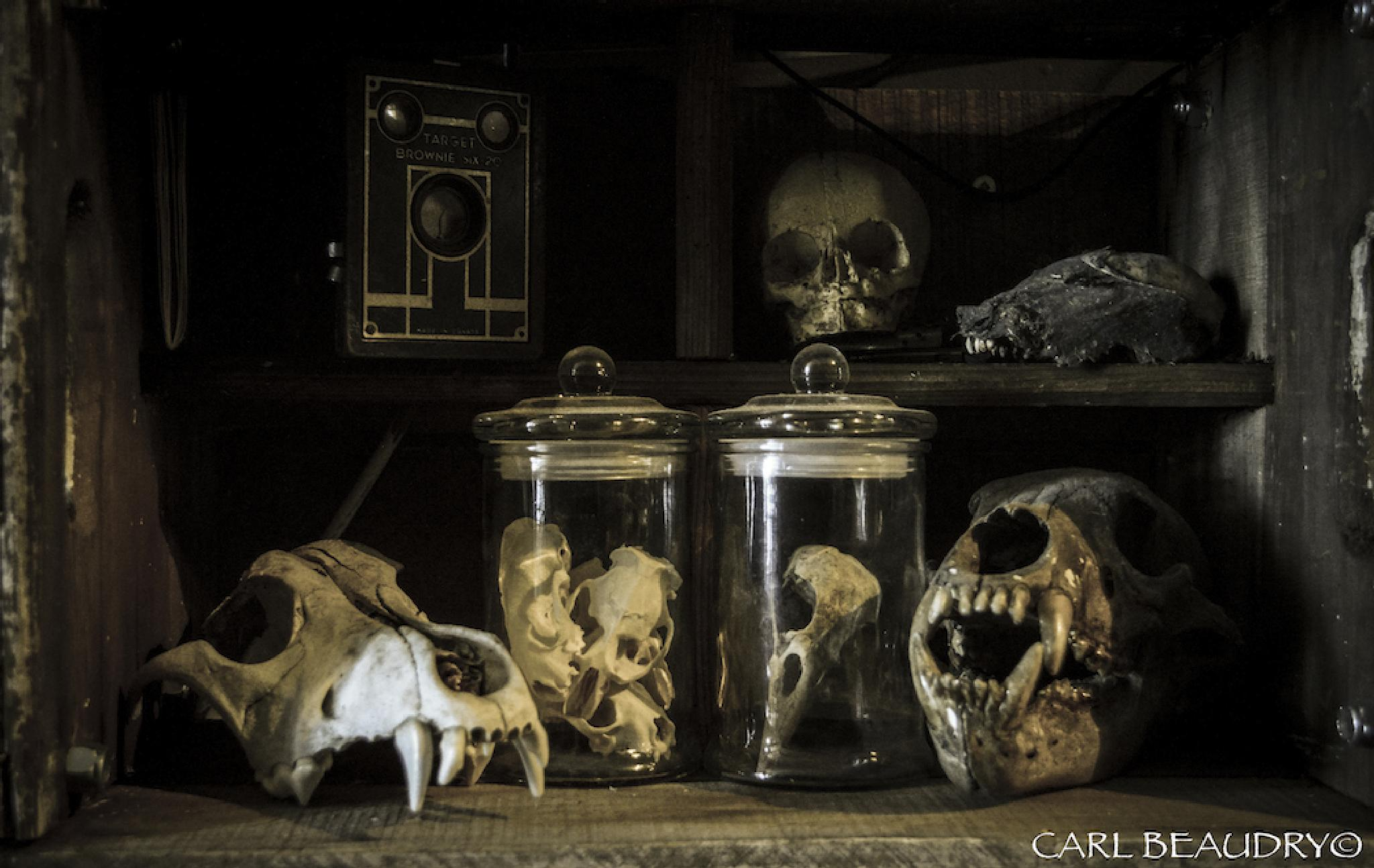 oddities by kjarl,photography