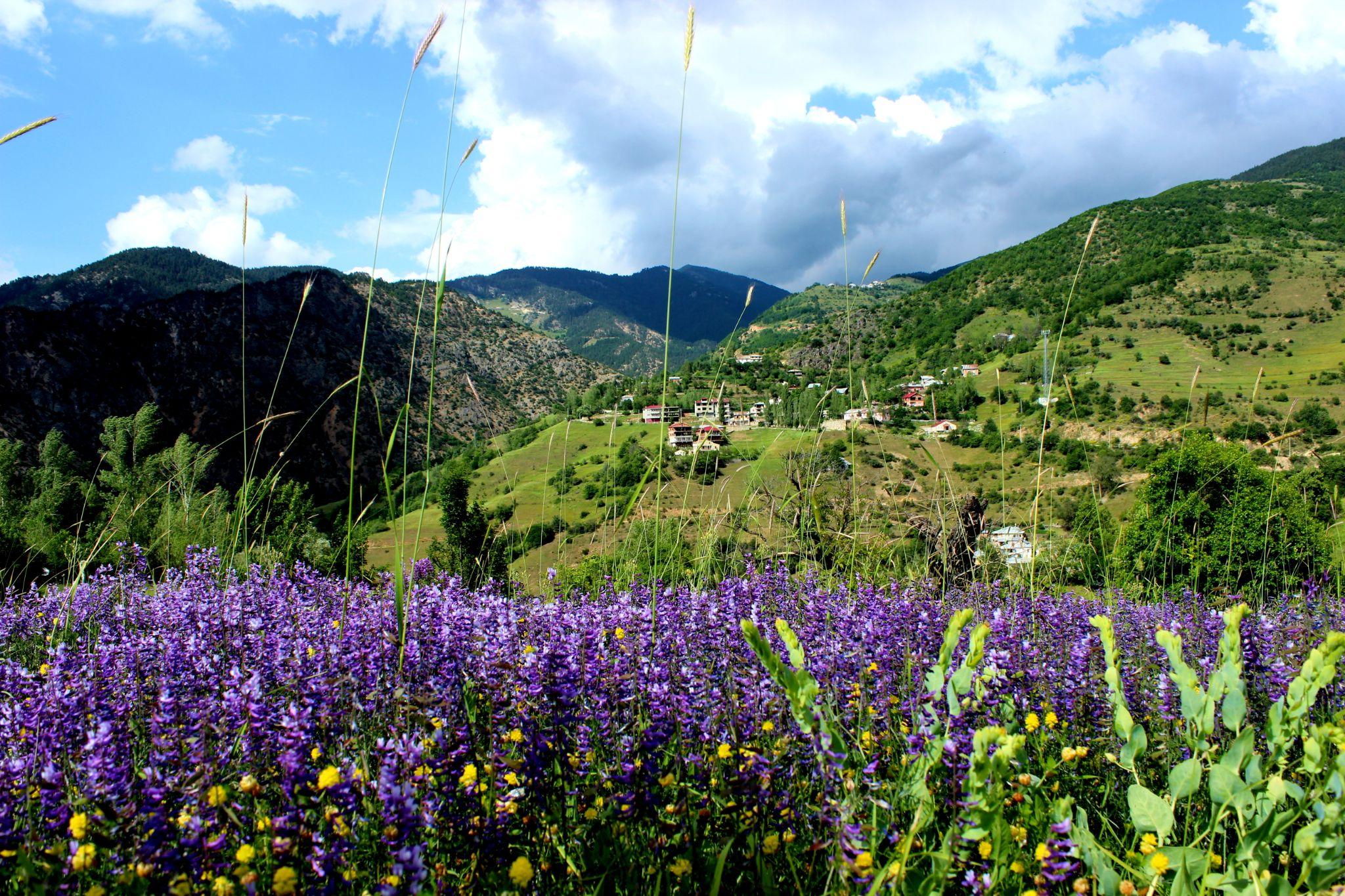 Zigana Köyünde Bahar by Tulay Onder