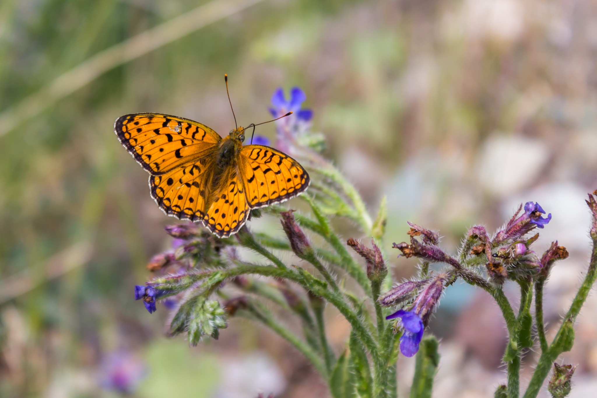 Tired Butterfly by Behzad Shabani