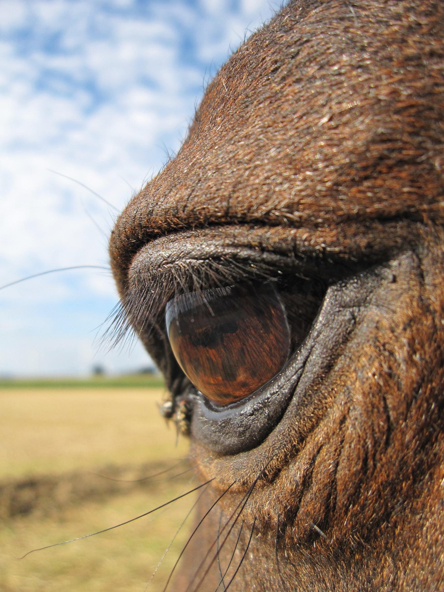 My horse's eye by daretobemad