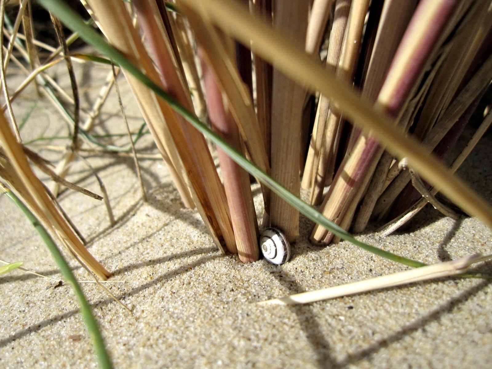 Snakeshell by daretobemad