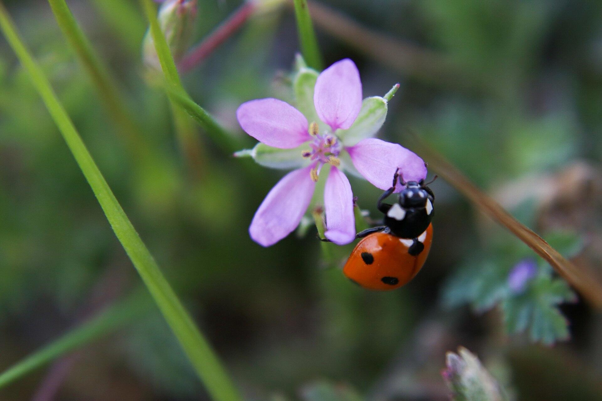 Ladybug 1 by Kitten Cabada Photography
