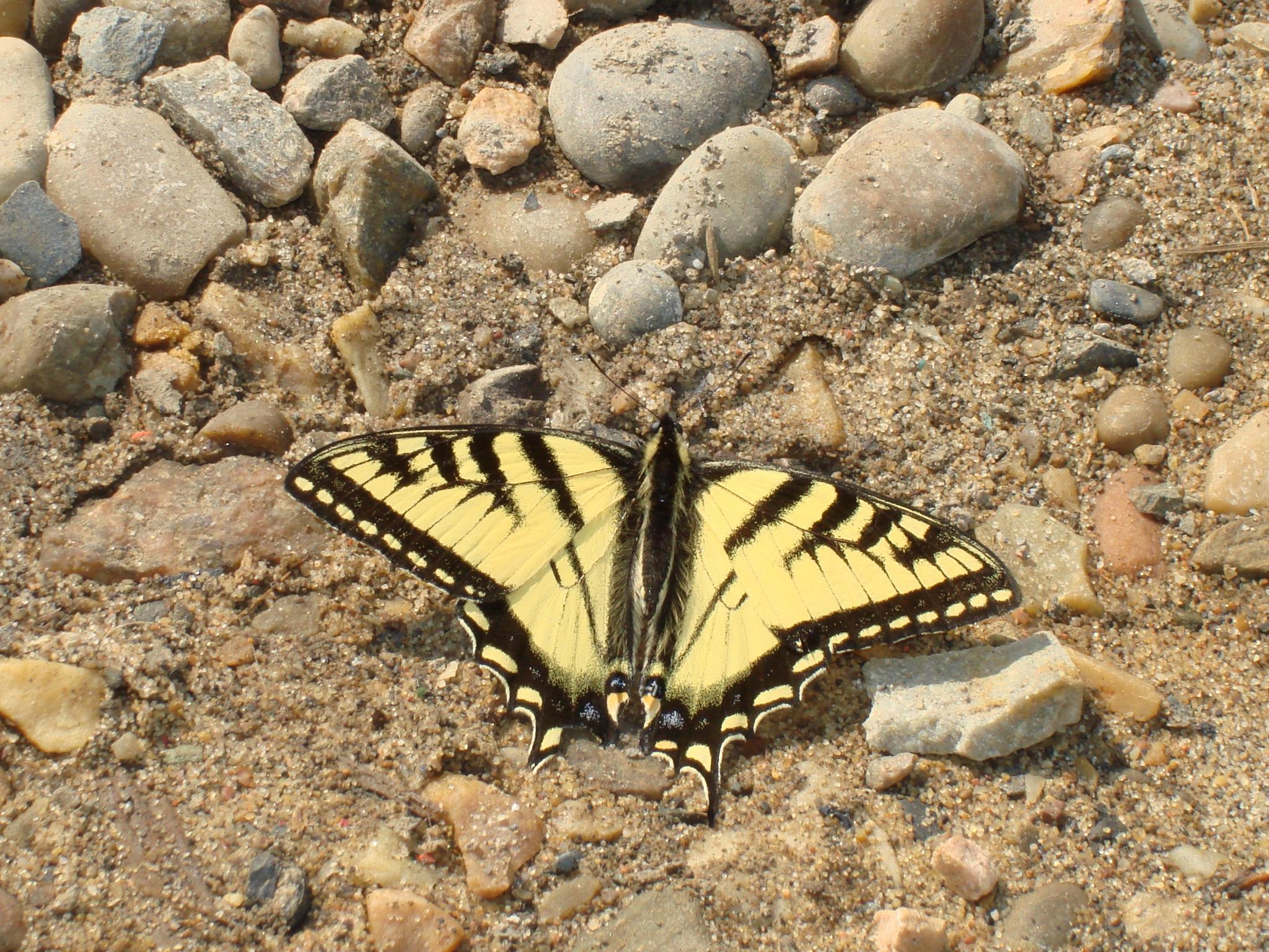 butterfly by norbert0460