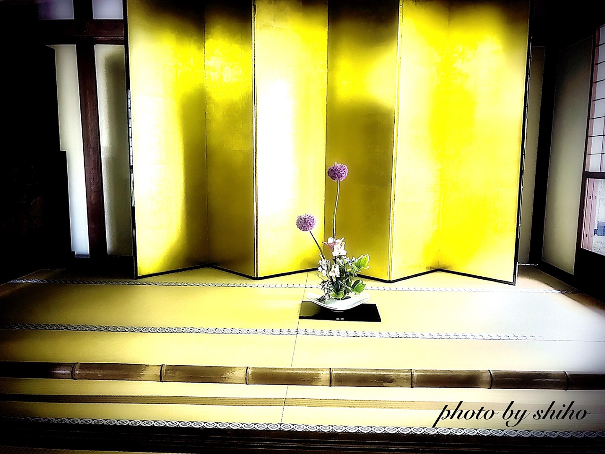 Ninnaji-temple   Kyoto Prefecture Kyoto-city Ukyo-Ward mimuroouti 33   https://ninnaji.wordpress.com by Shiho
