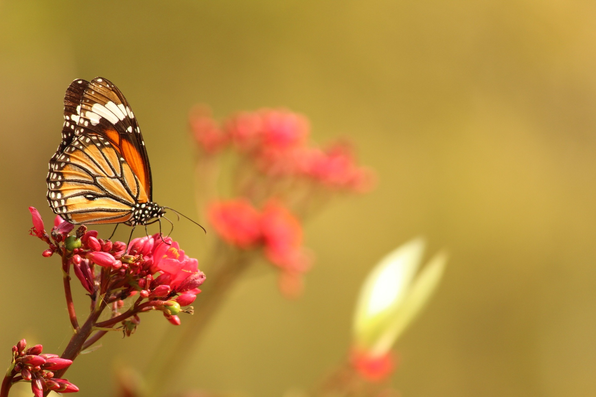Untitled by hely suthar