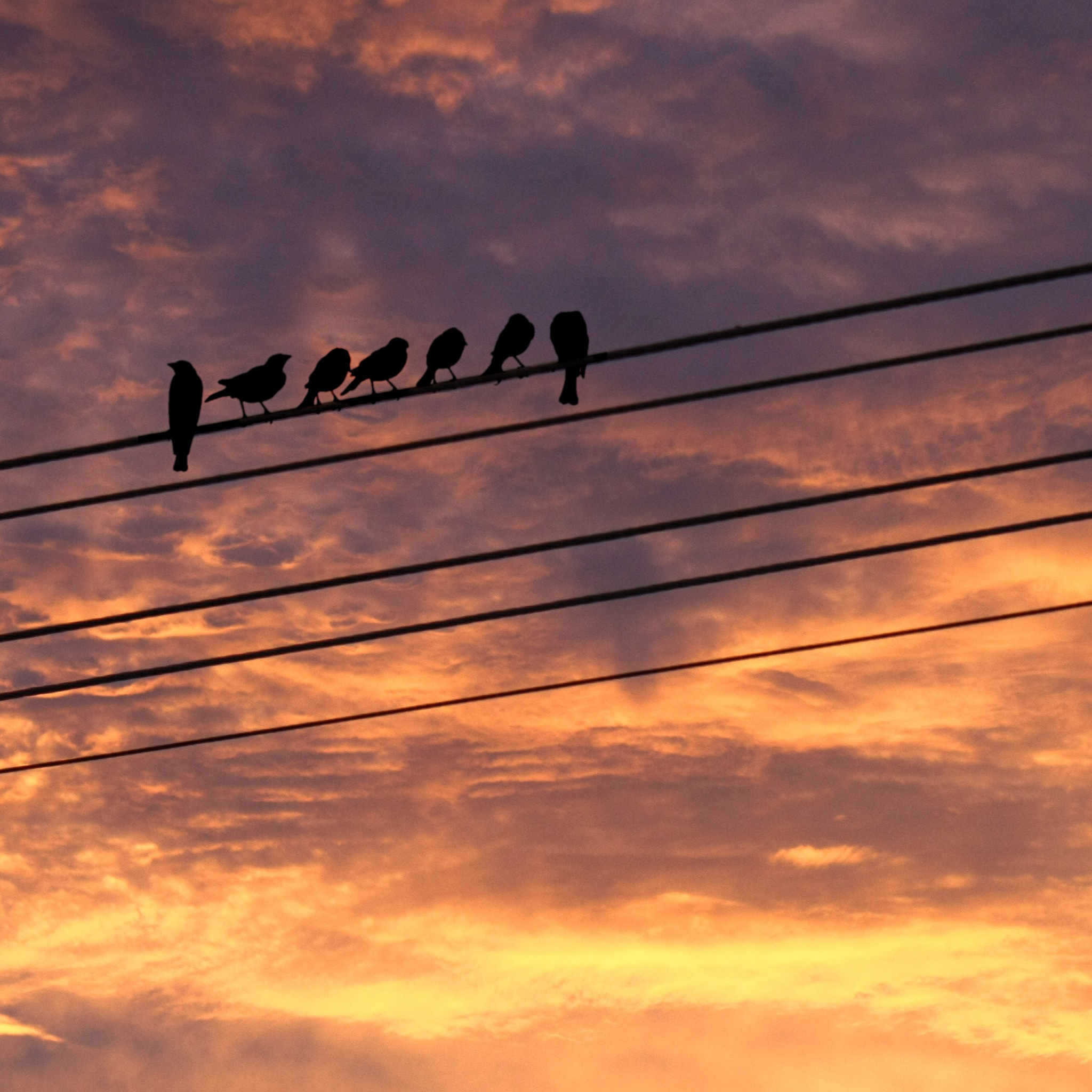 Birds on Wire by Pavol Vesely