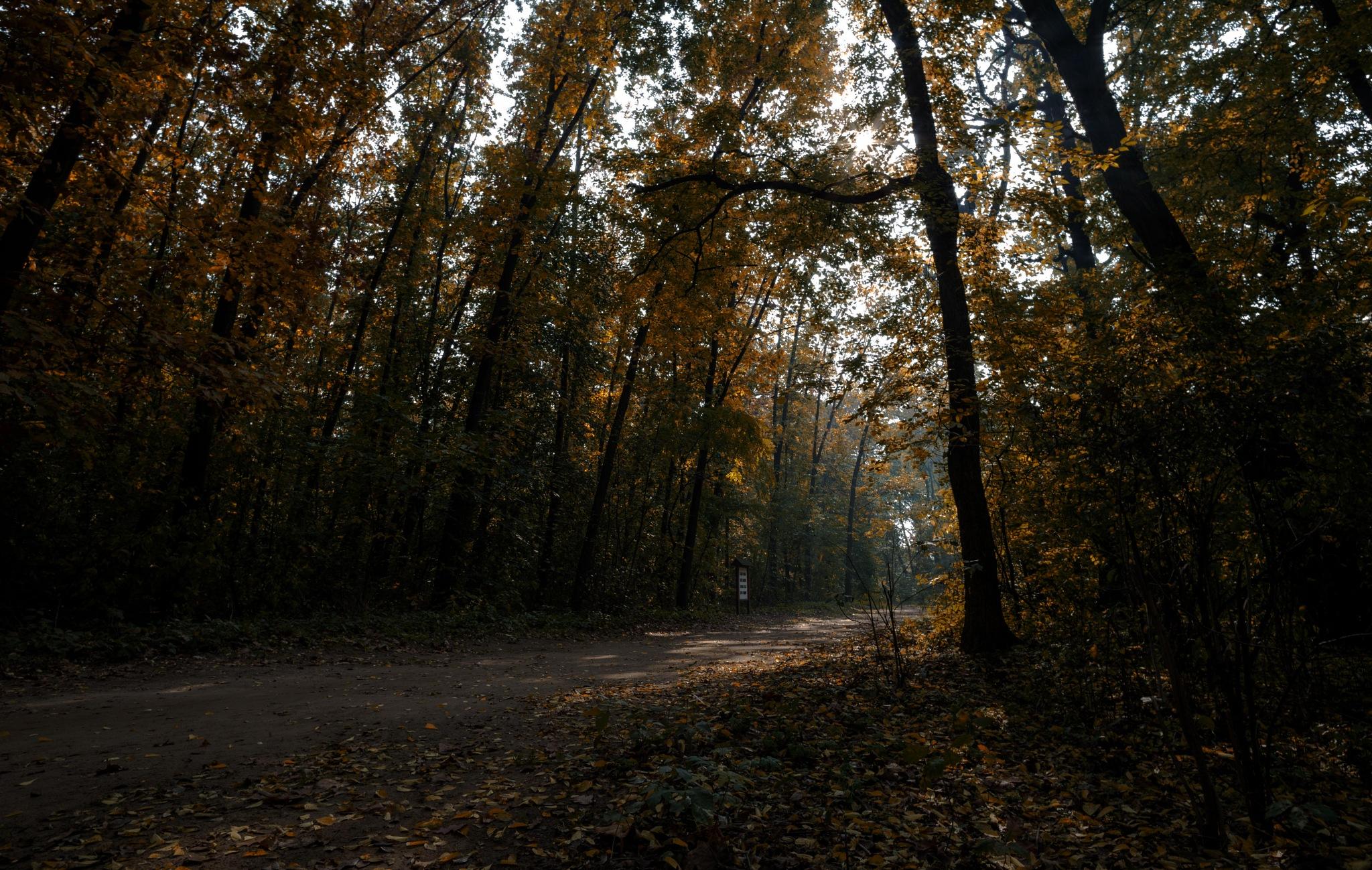 Autumn forest by Szilágyi Szabolcs