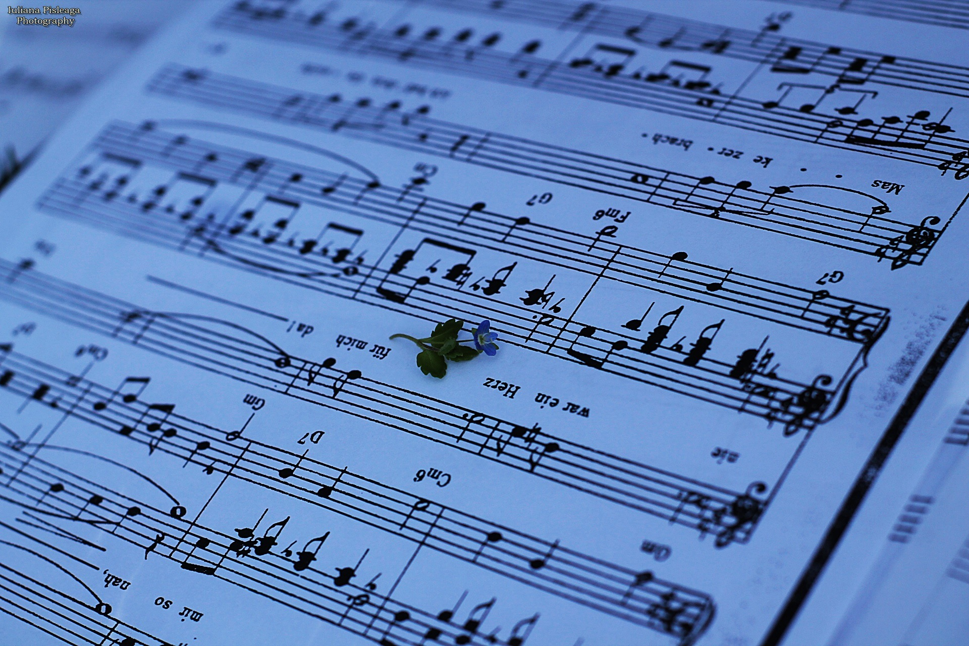 Music notes and a small flower by pisleagaiuliana