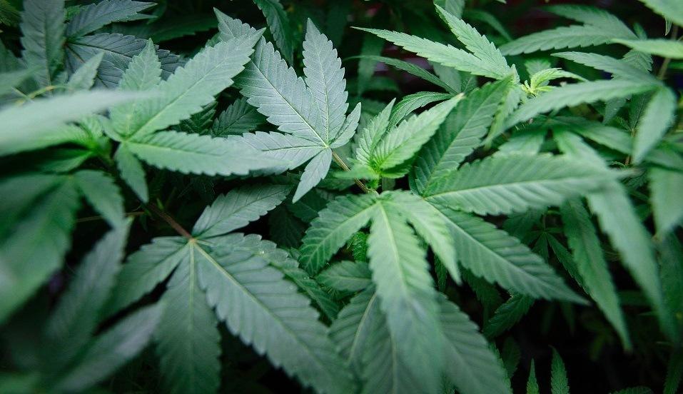 Marijuana Marketing by KandraMarse
