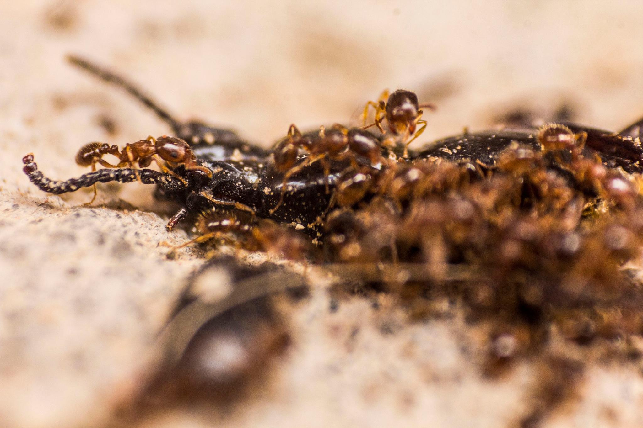 Ant by Mahdi Chabou