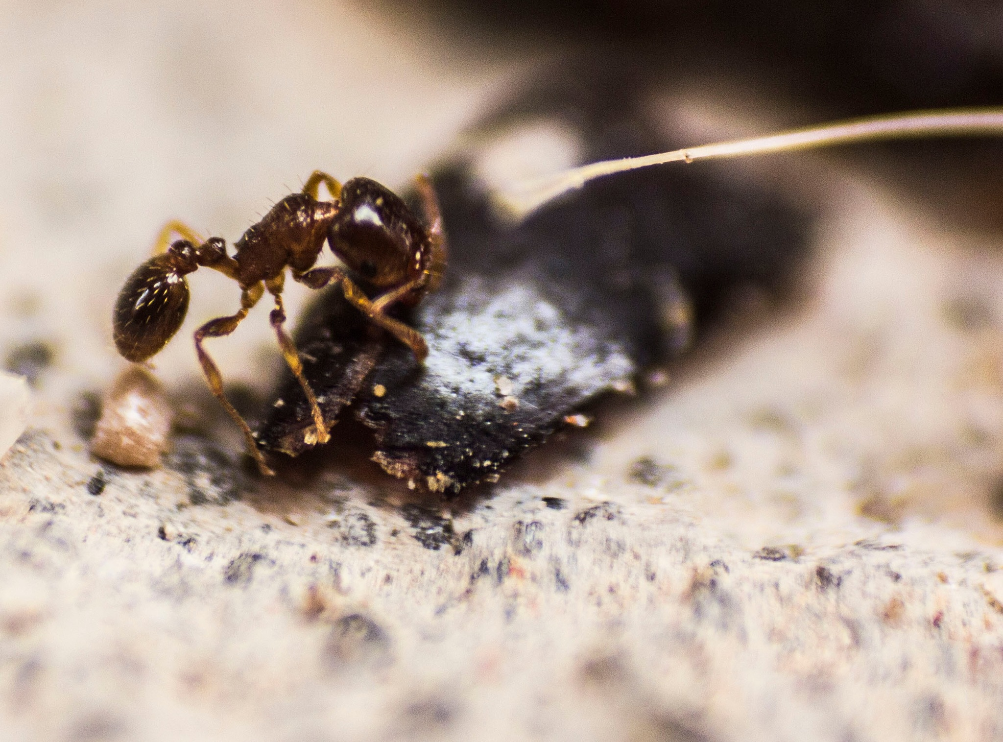 Ant eat Ant by Mahdi Chabou