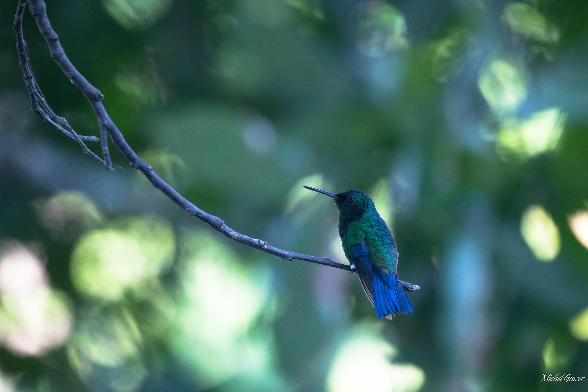 Bleu et vert by Michel Gasser
