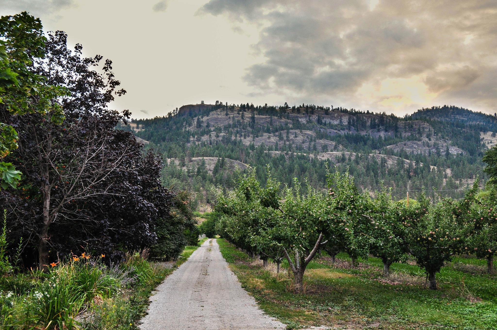 The Road Into the Orchard at Dusk by Ang Klassen