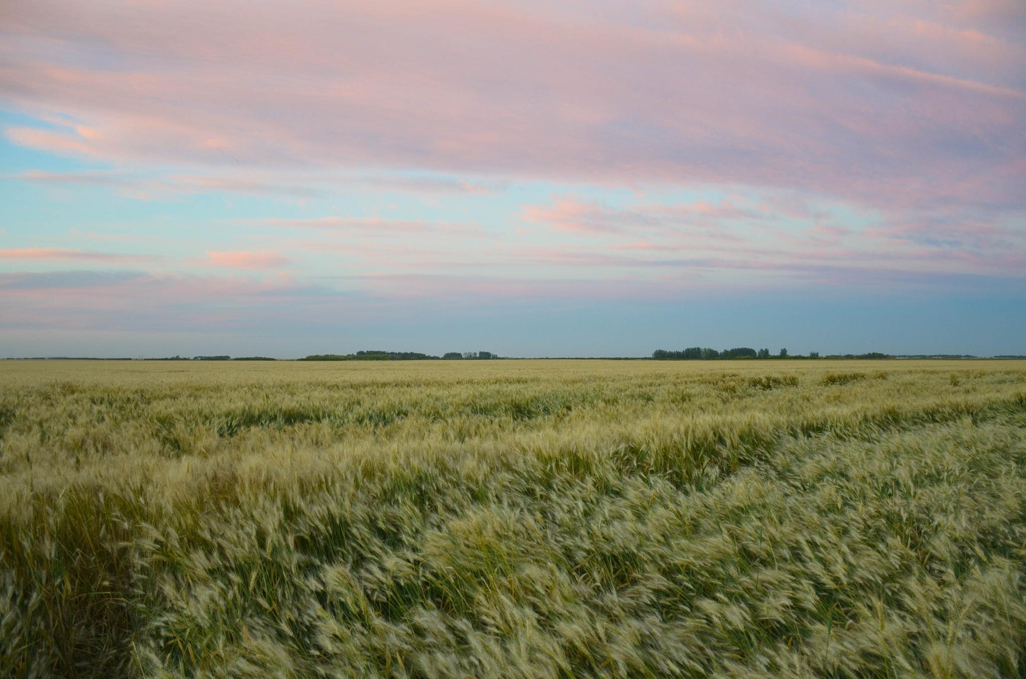 Saskatchewan at Dusk by Ang Klassen