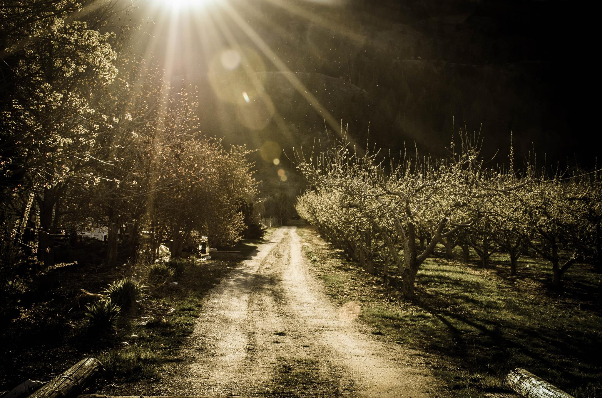 And The Sun Rained Down on the Orchard Below by Ang Klassen