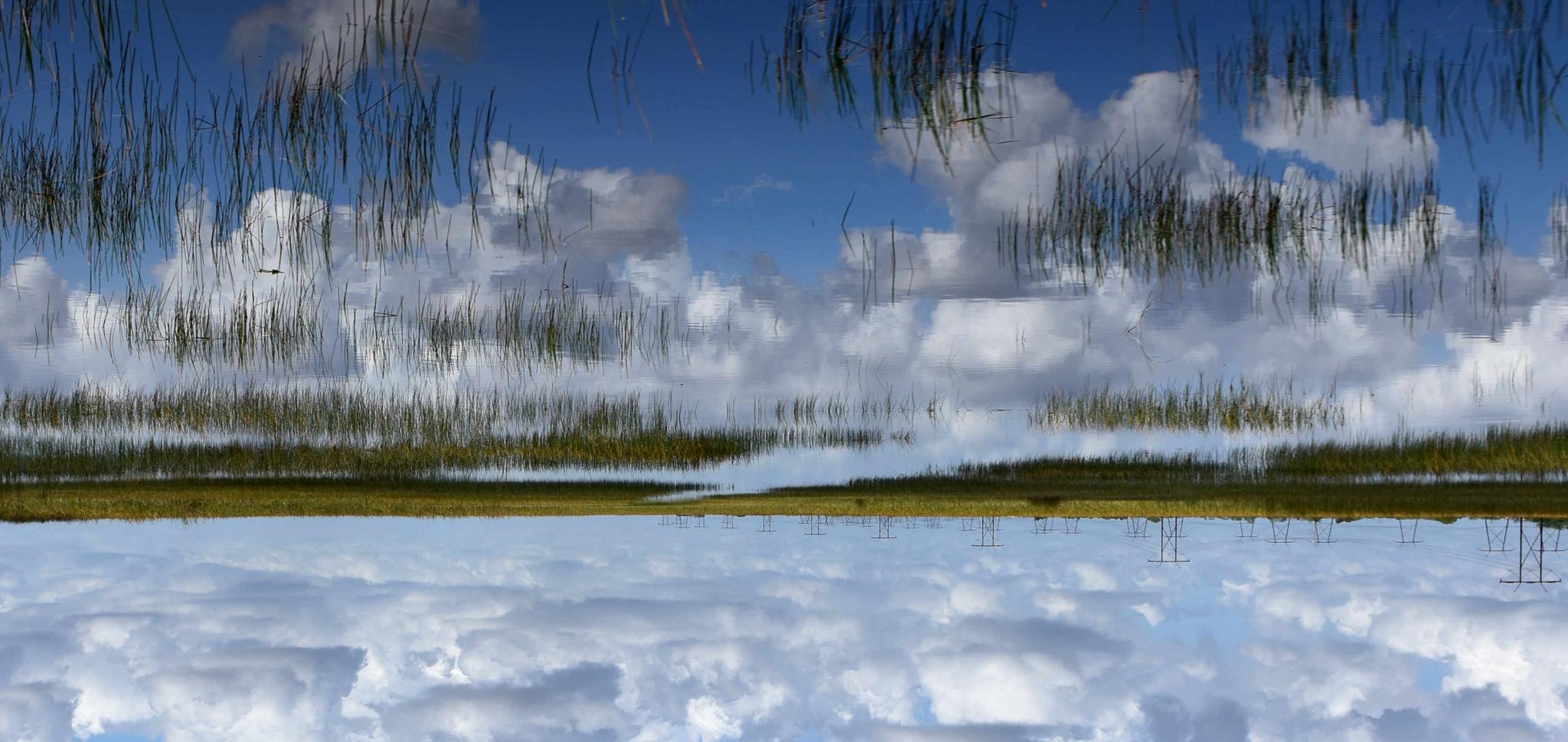 Everglades by jpzalaquett