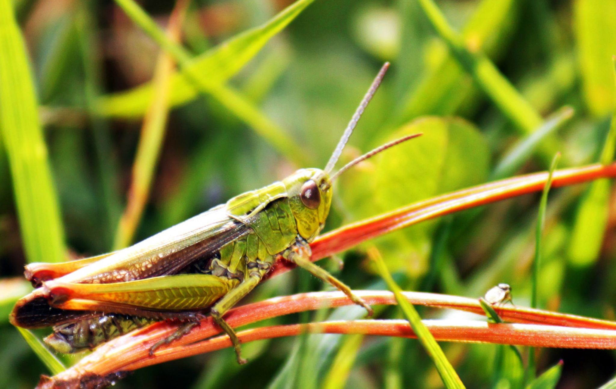 Grasshopper by Michael Armstrong